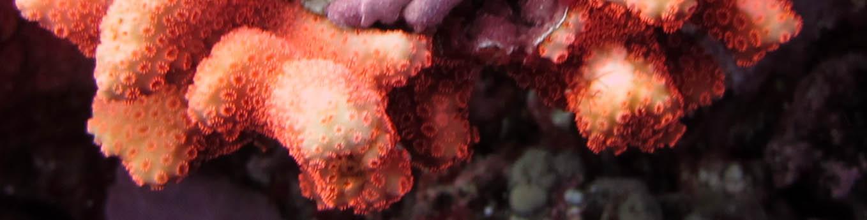 red fluorescence.jpg