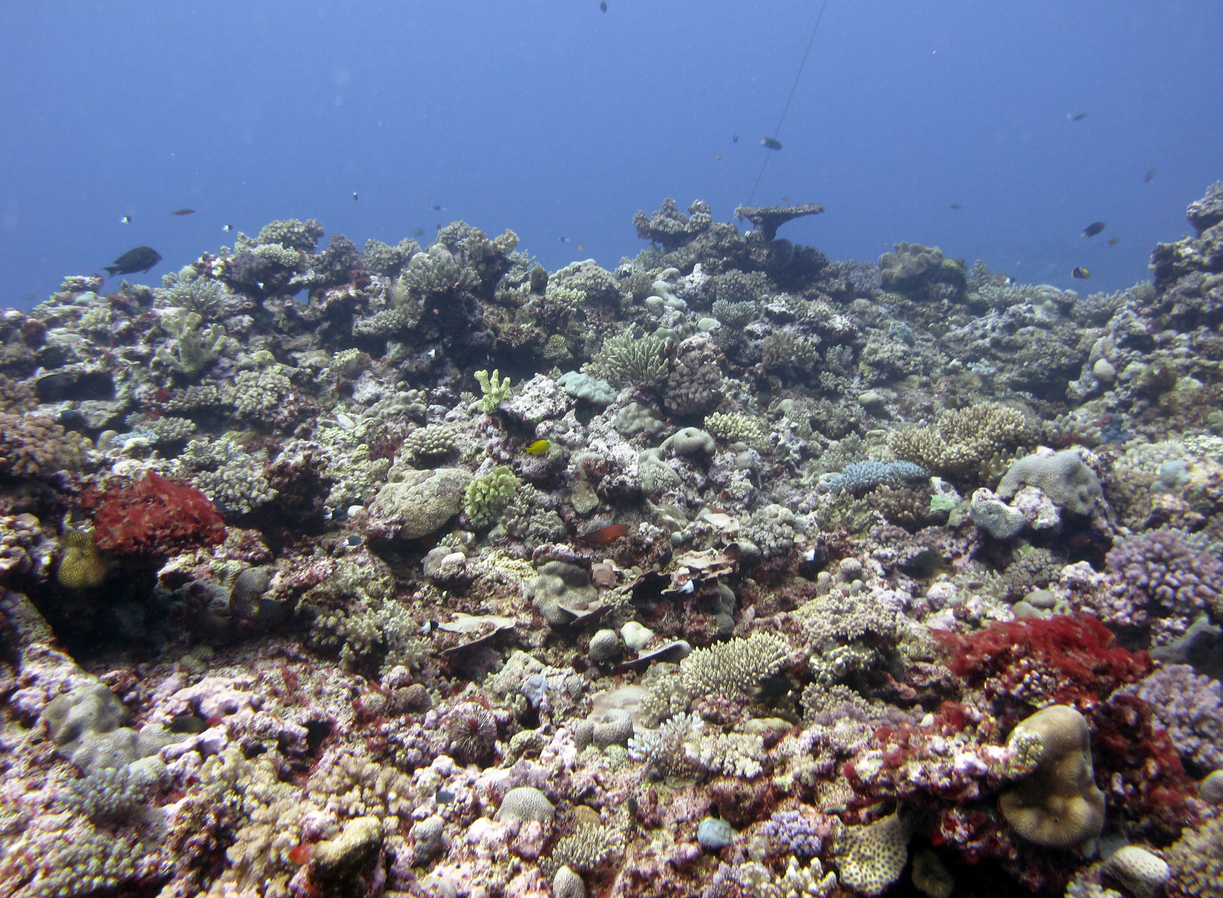 second dive at Moala.jpg