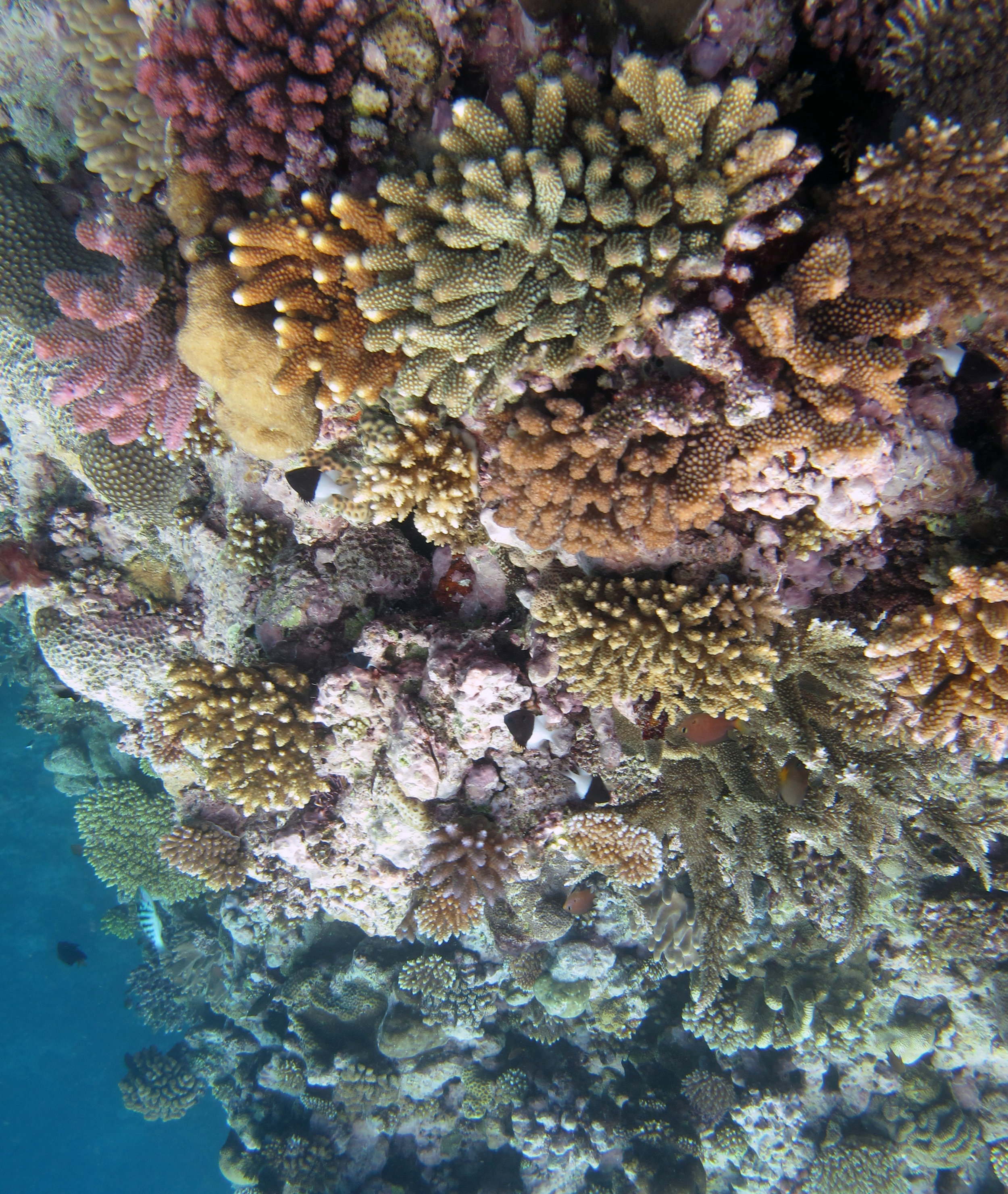colorful corals.jpg