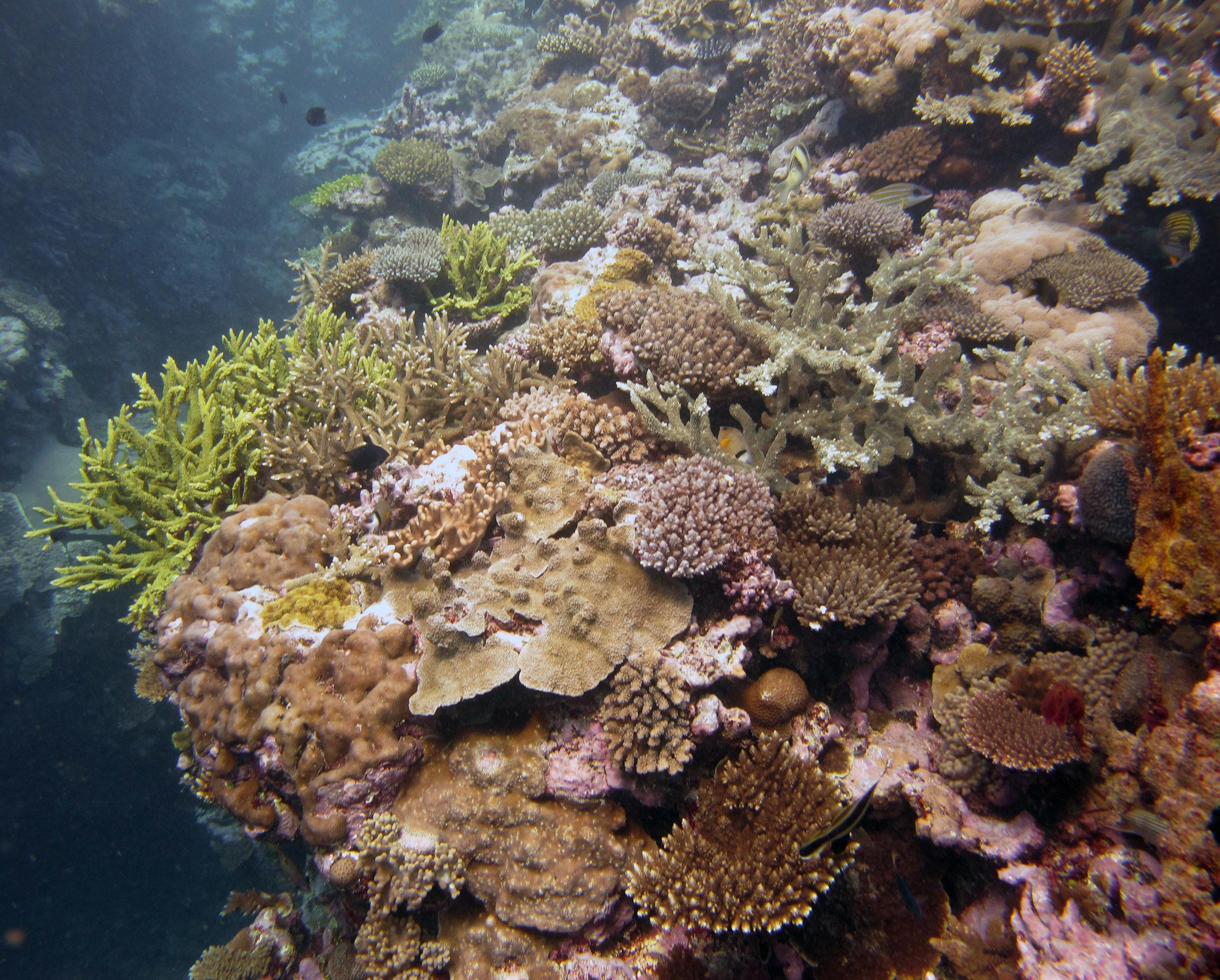 coral everywhere.jpg