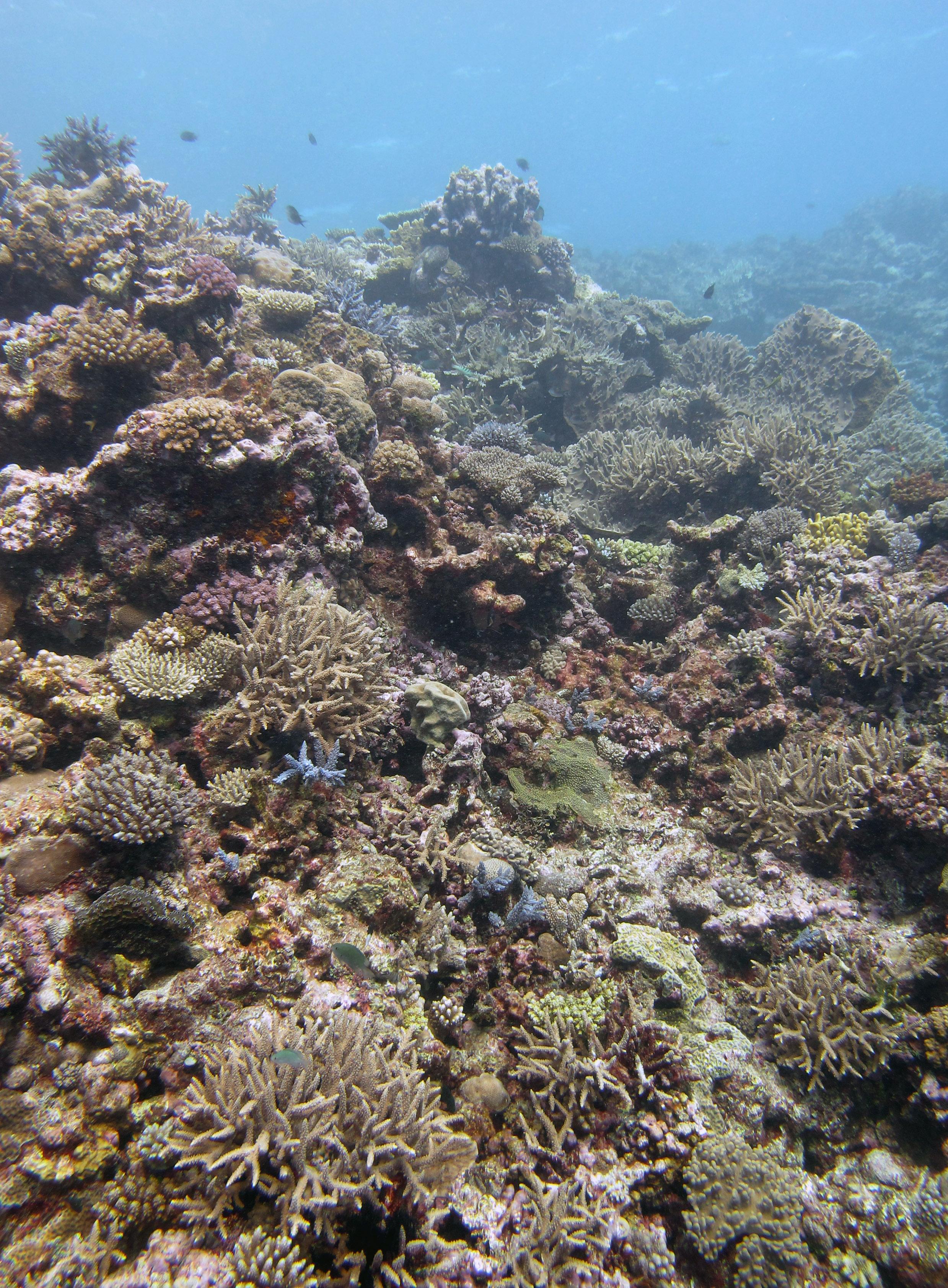 first dive at Fulanga.jpg