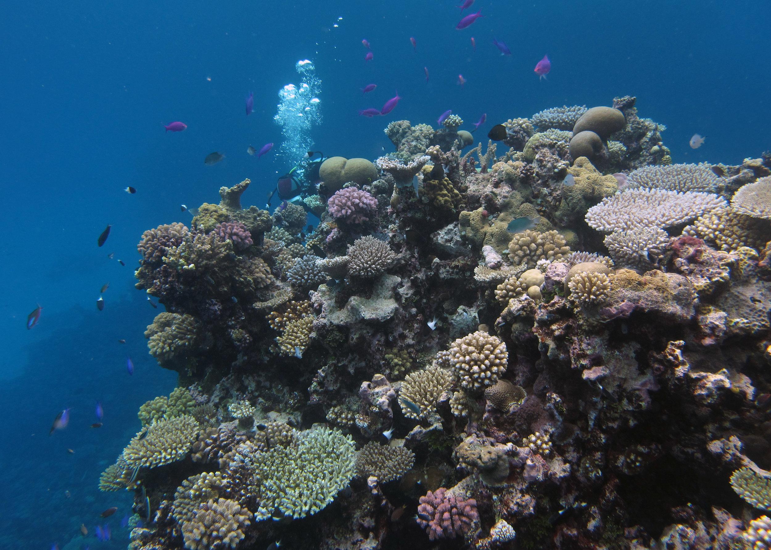 first dive at Kabara.jpg