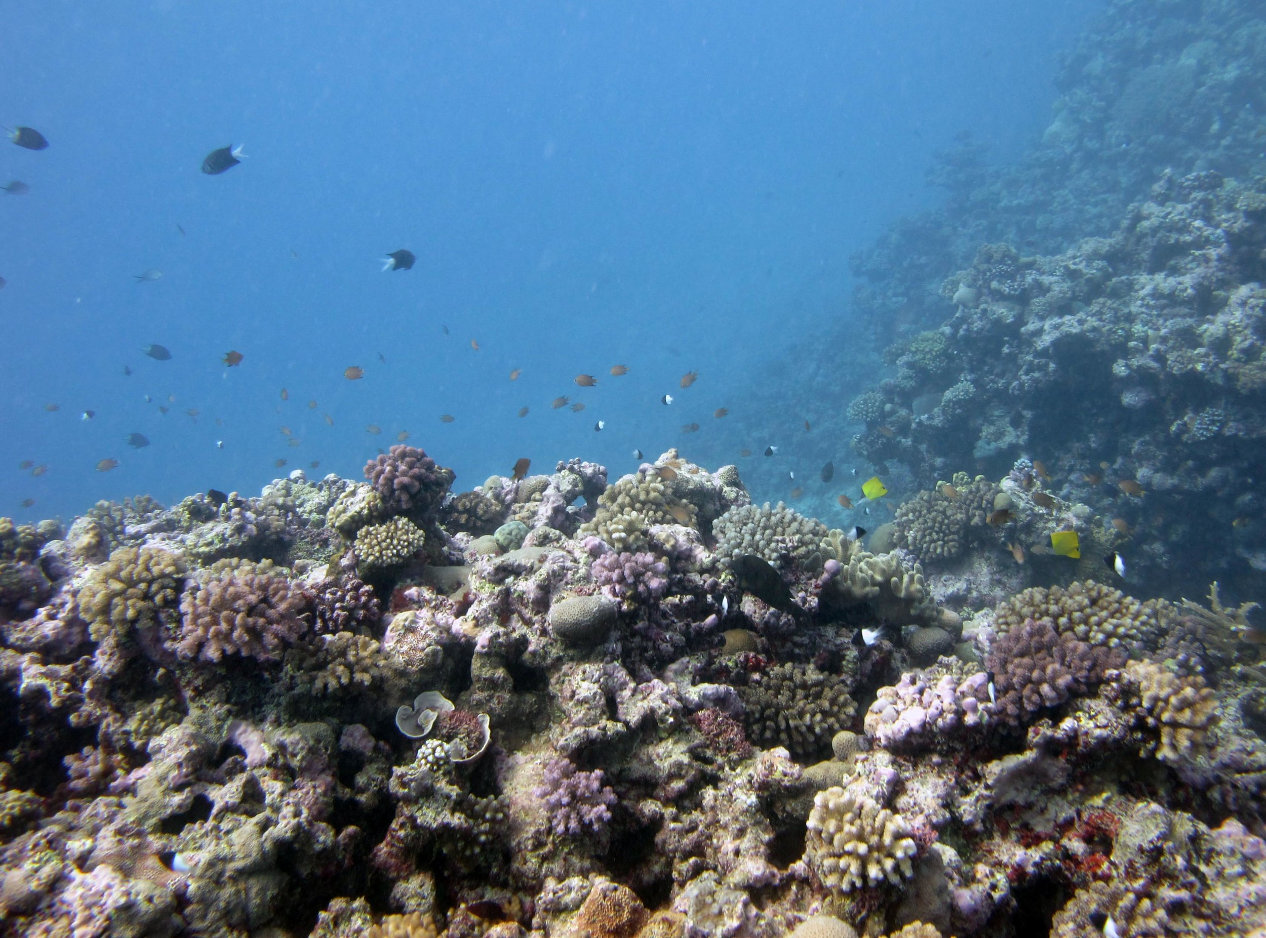 spur and groove reef.jpg