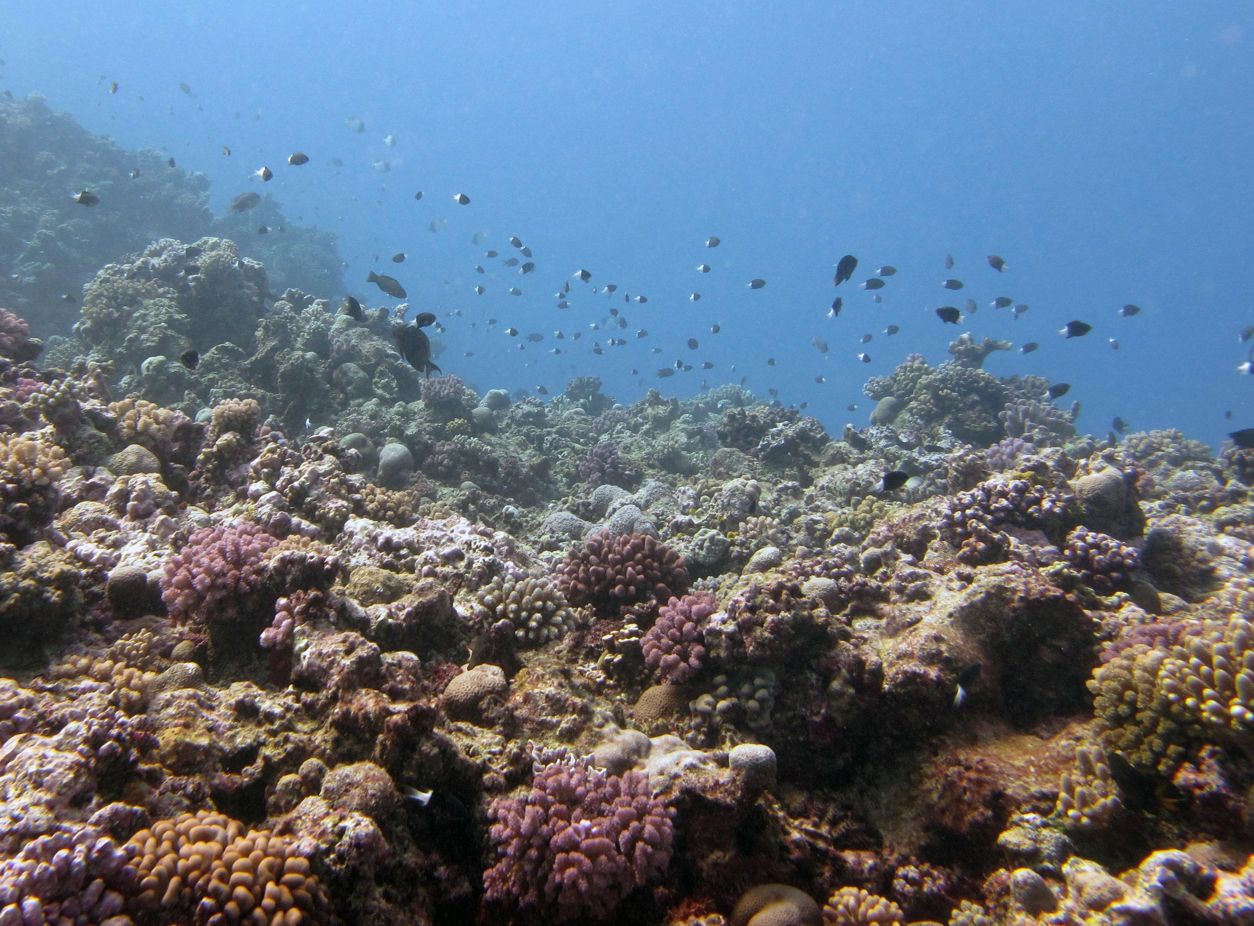 high fish density.jpg