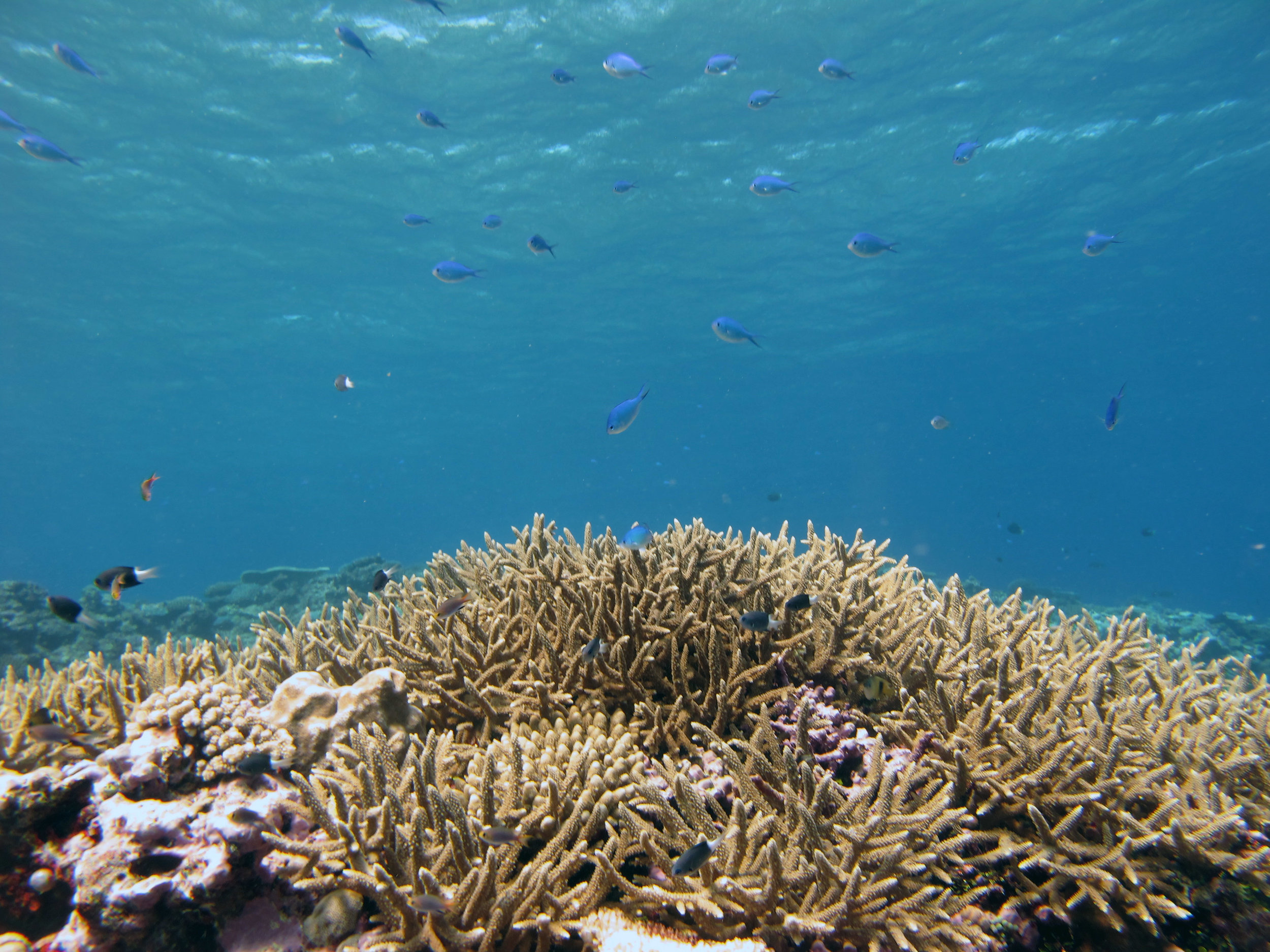 acropora mountain.jpg