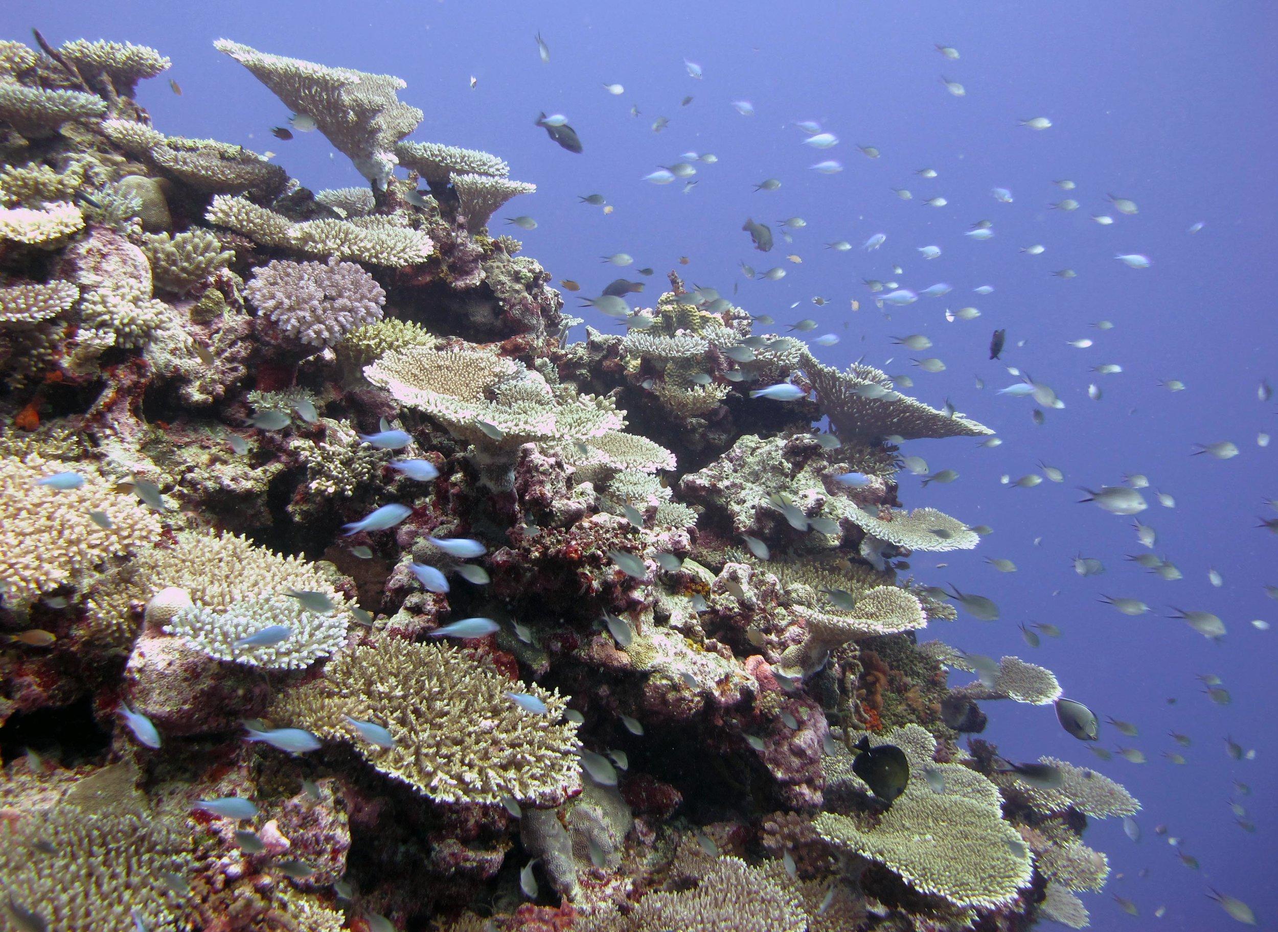 Cicia, Lau Archipelago.jpg