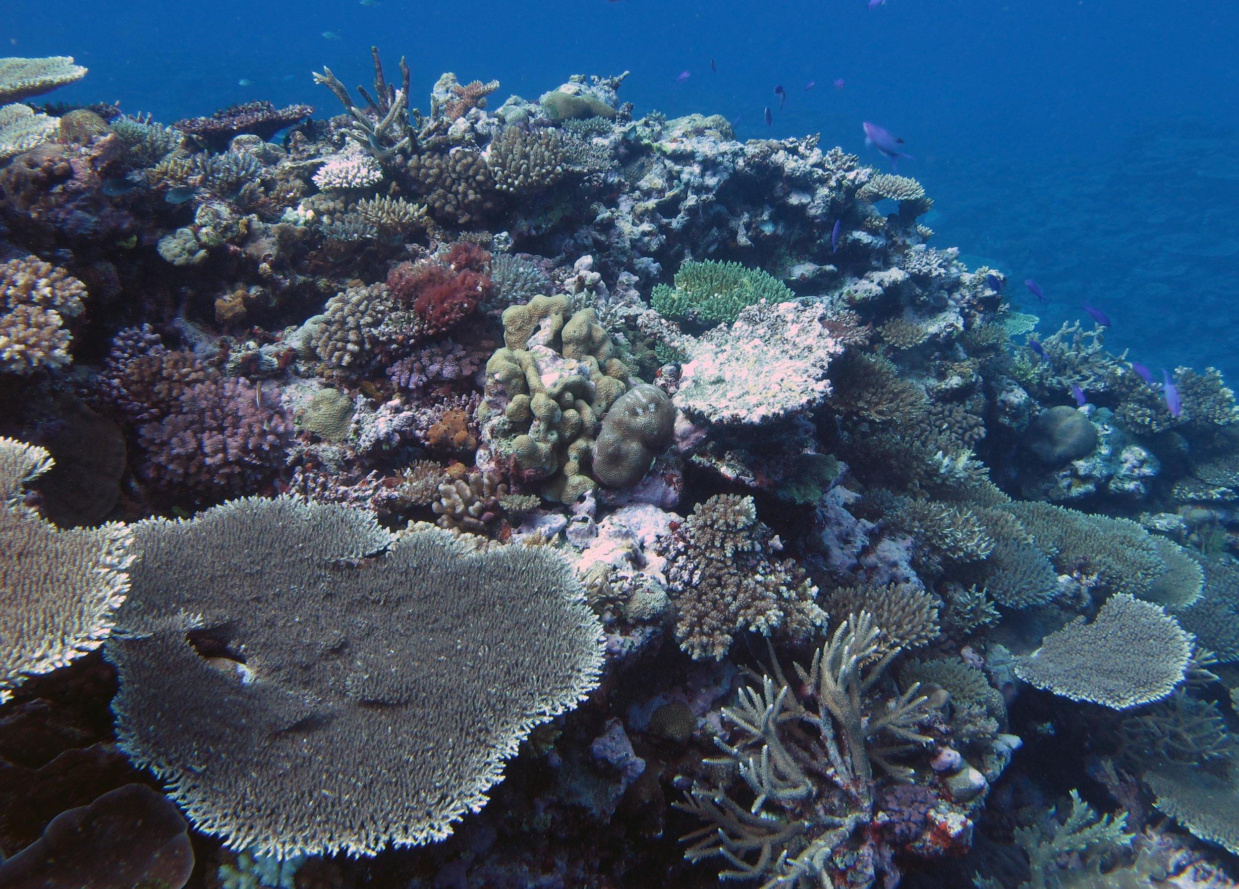 beautiful reef.jpg