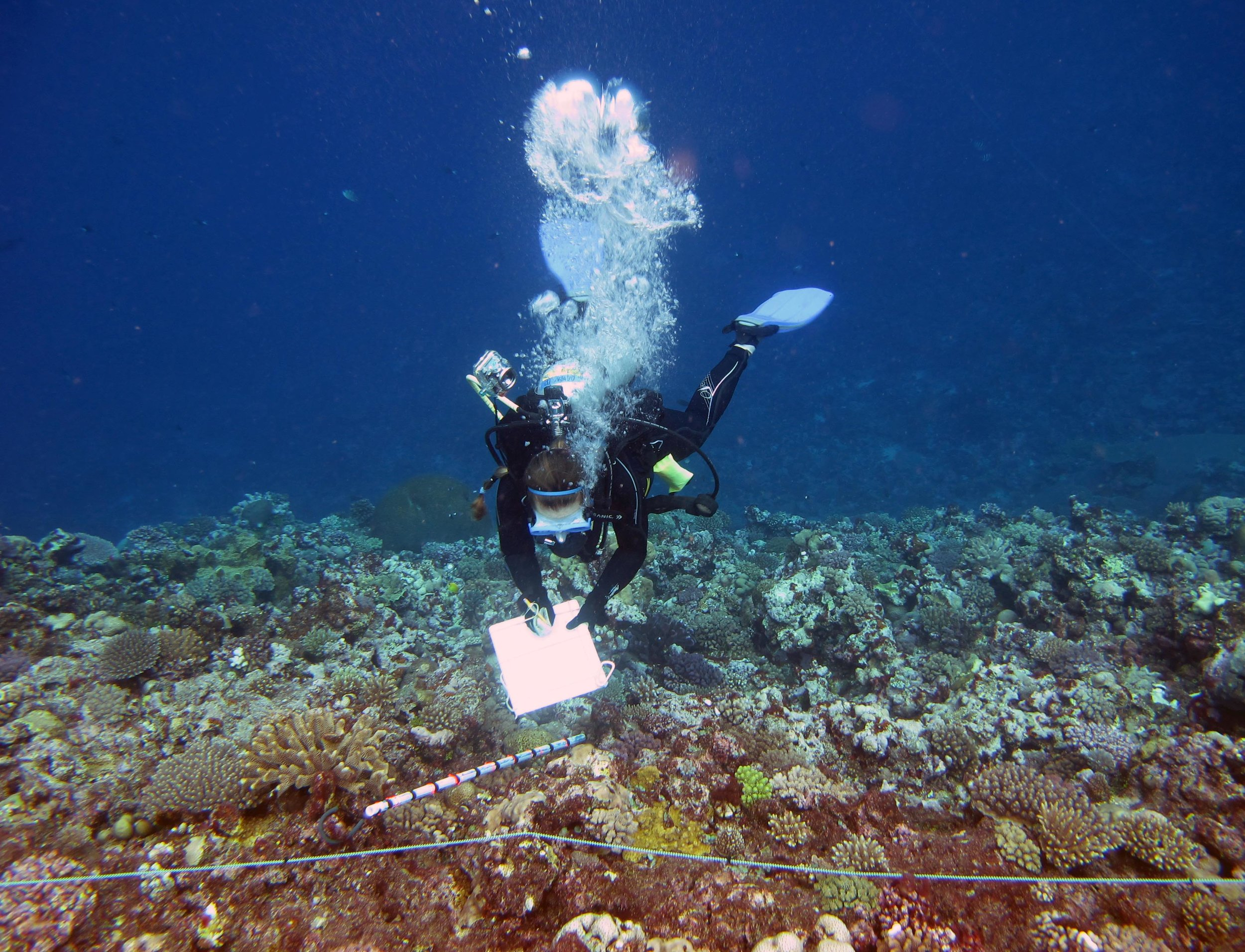 Dawn surveying corals.jpg