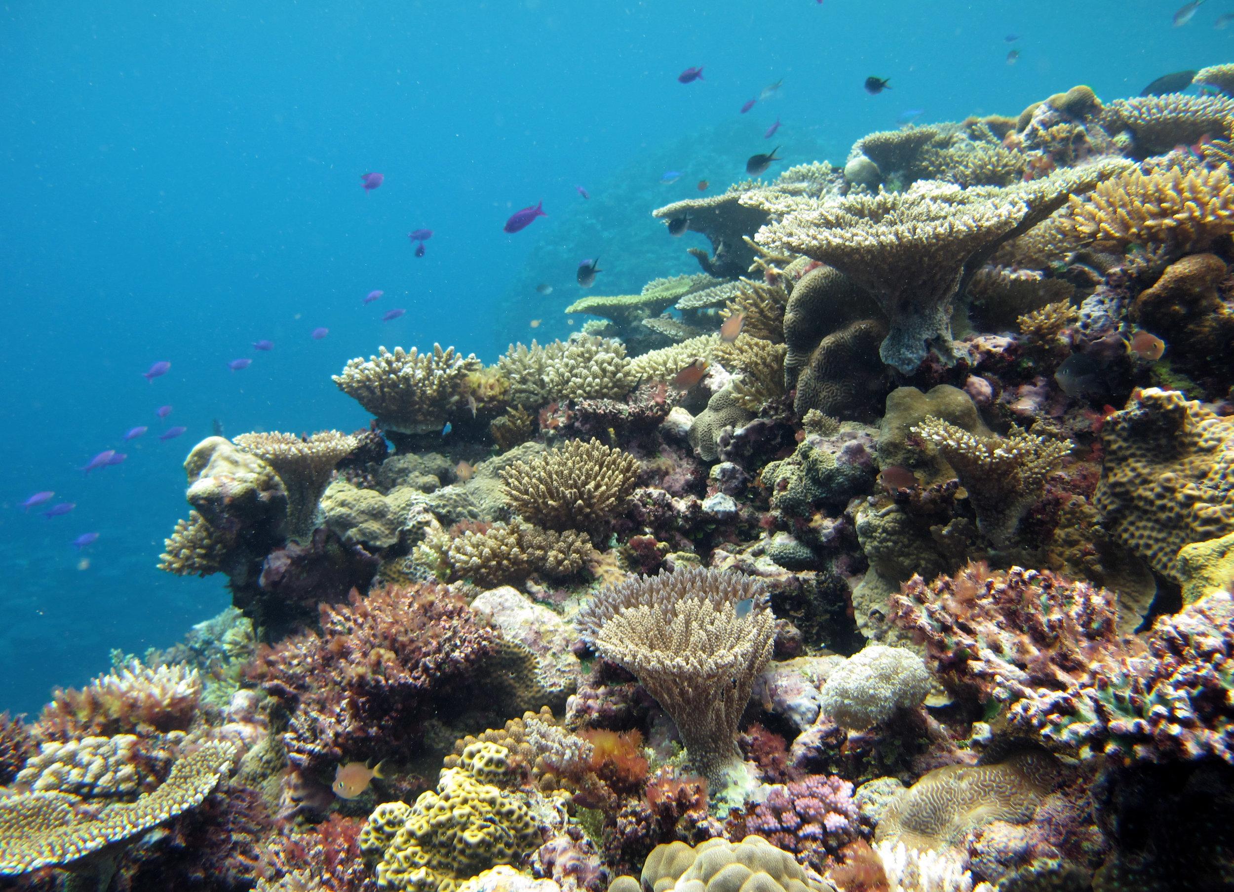 beautiful corals of Fiji.jpg