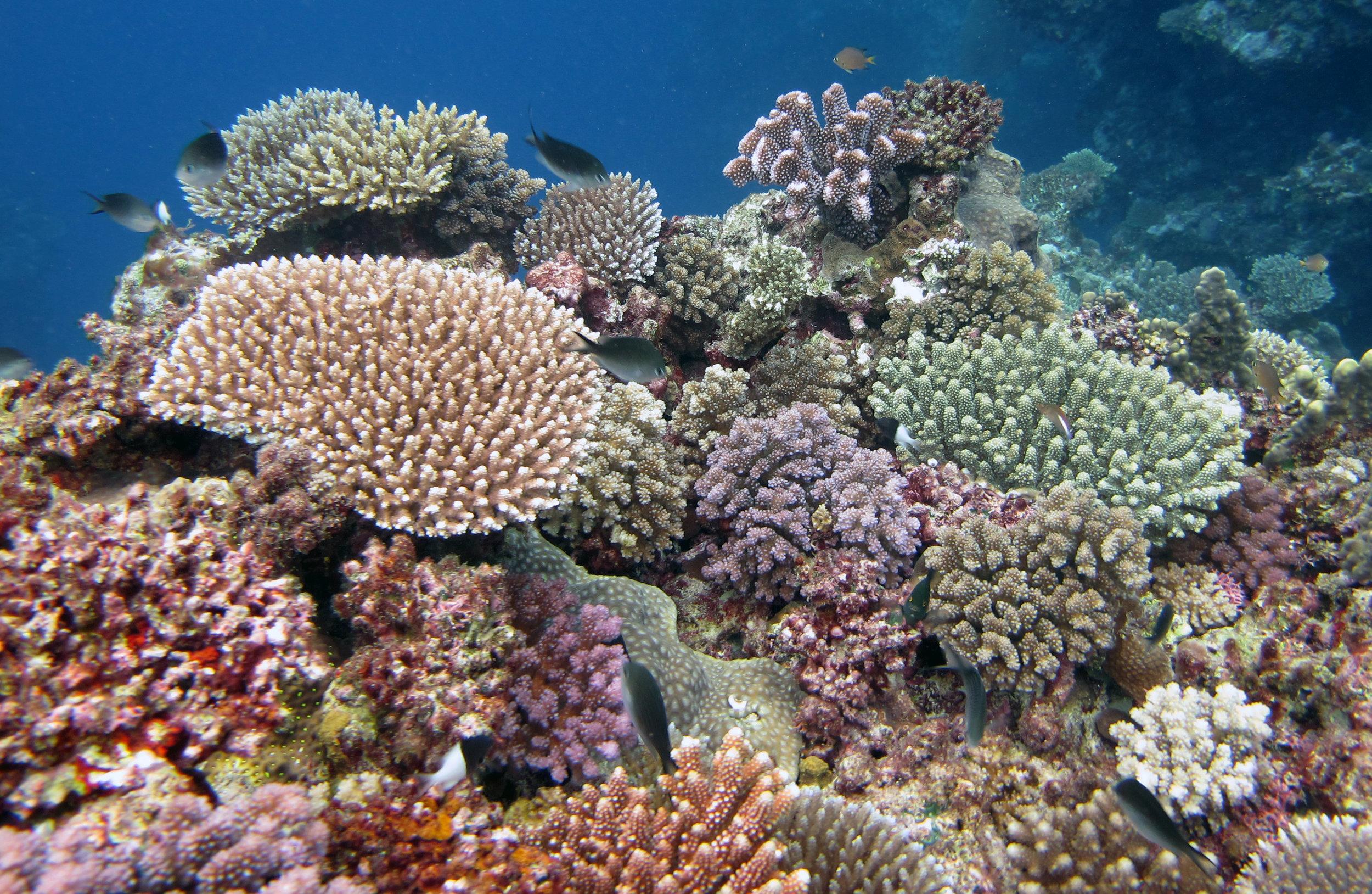 amazing coral garden shot.jpg