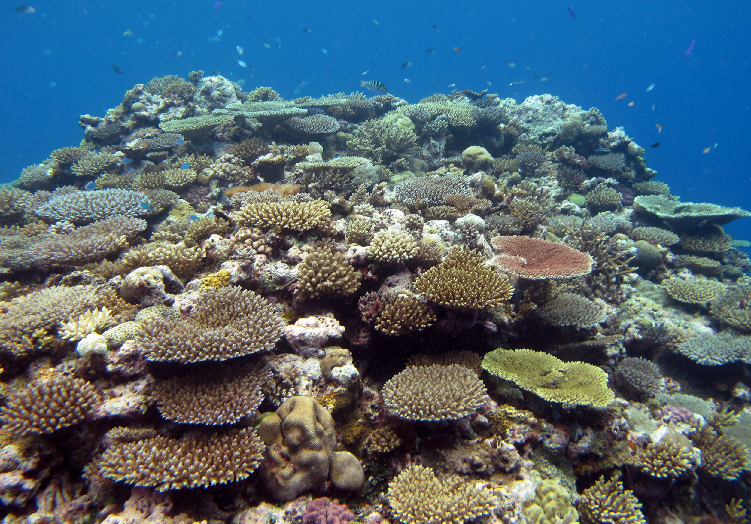 coral bommie.jpg