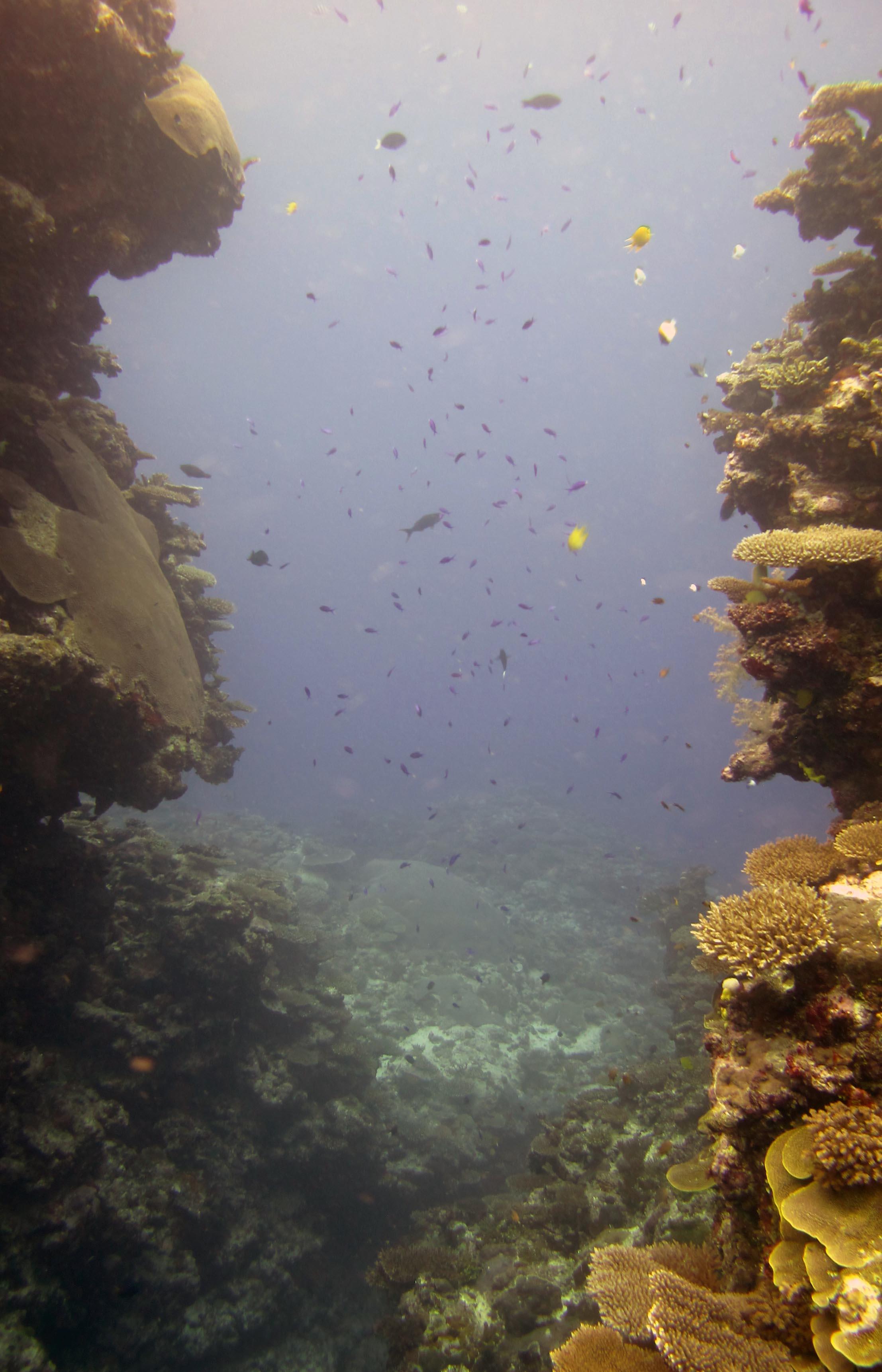 fish filled canyon.jpg