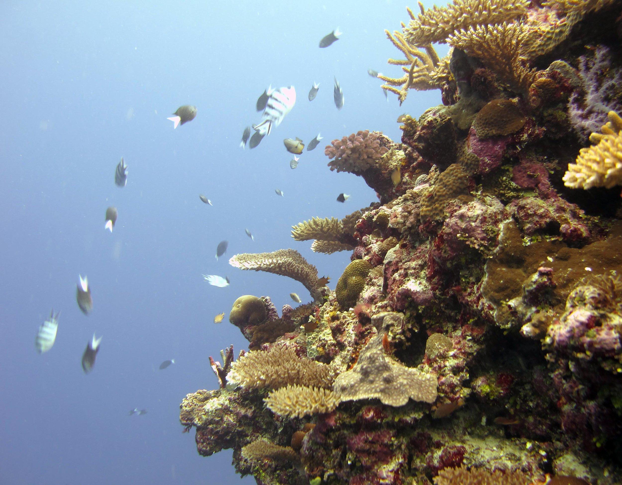 edge of the reef.jpg