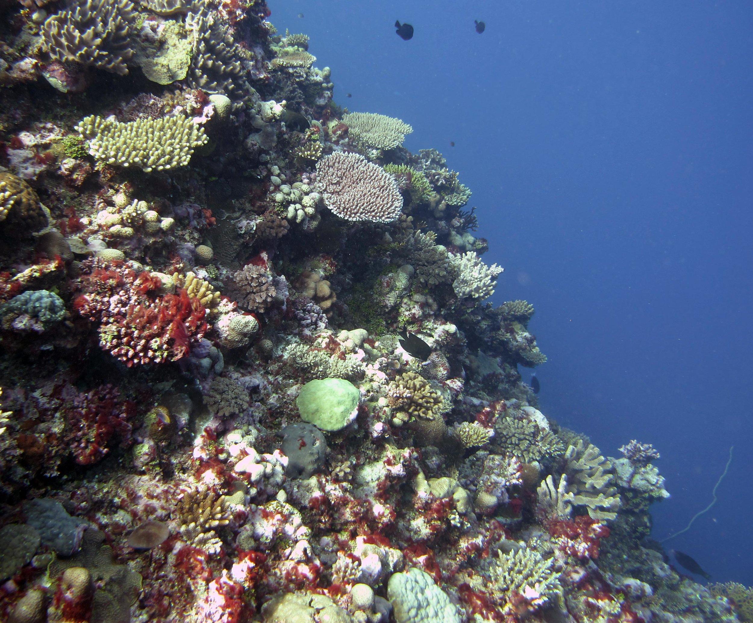 2nd dive at Mago.jpg