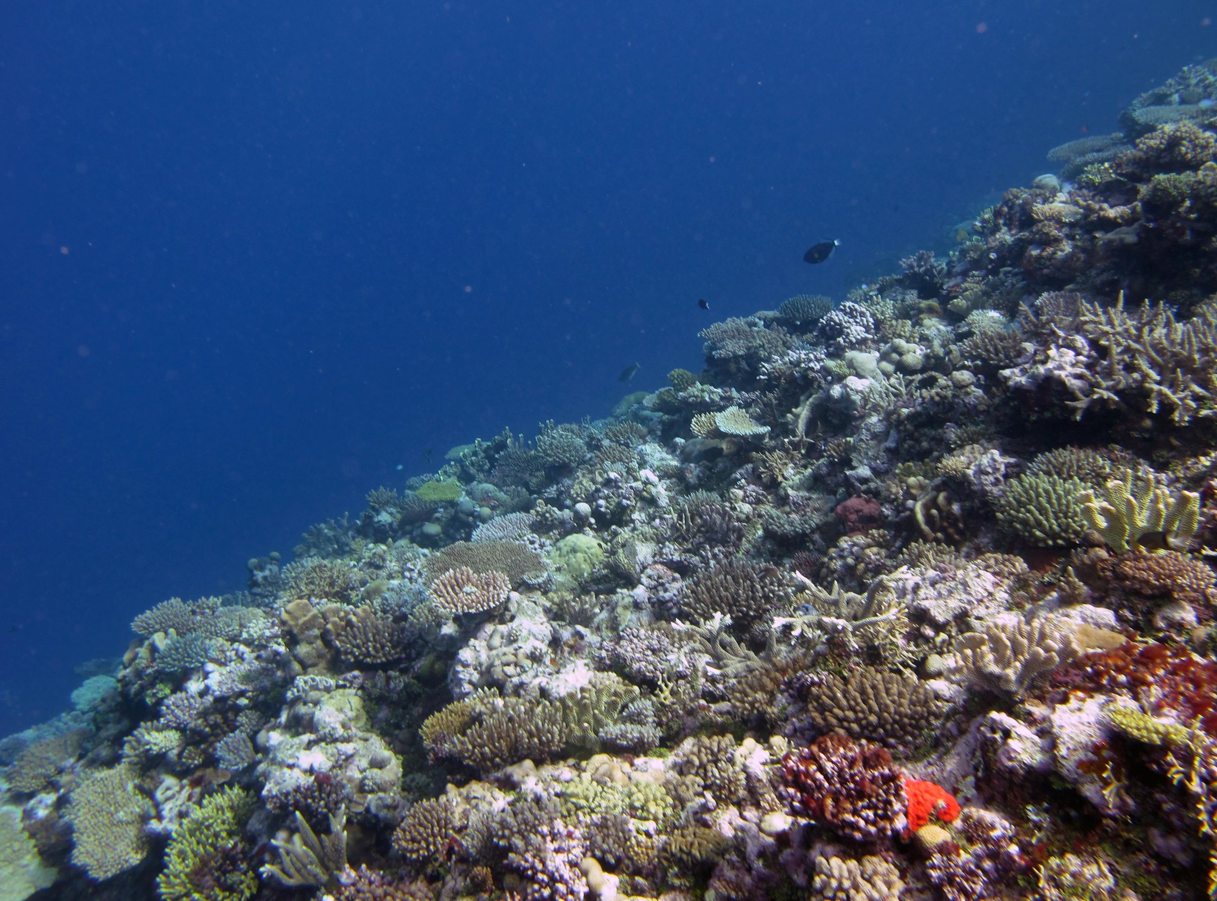 Mel Gibson reef.jpg