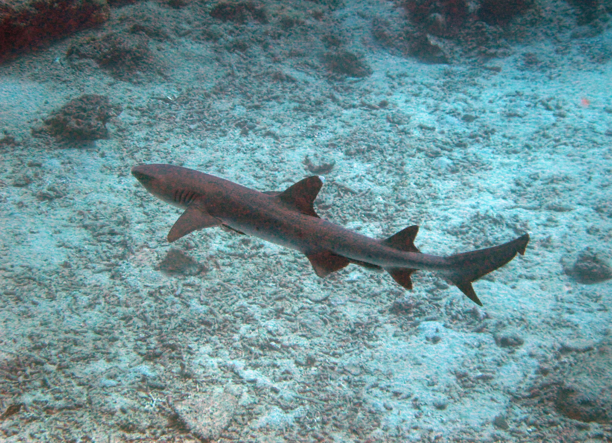 good shark shot.jpg