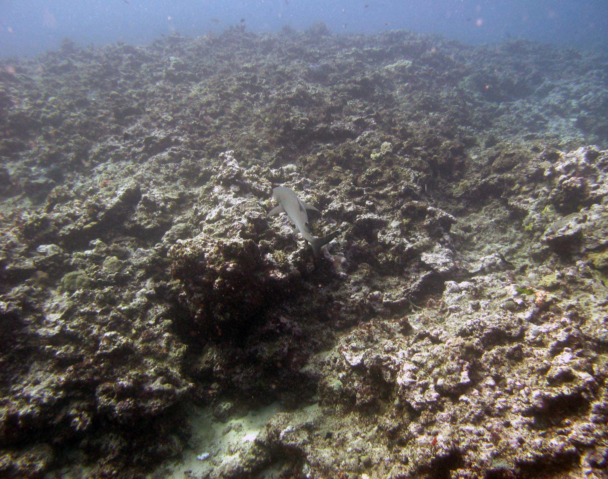white tip at FJVB61.jpg