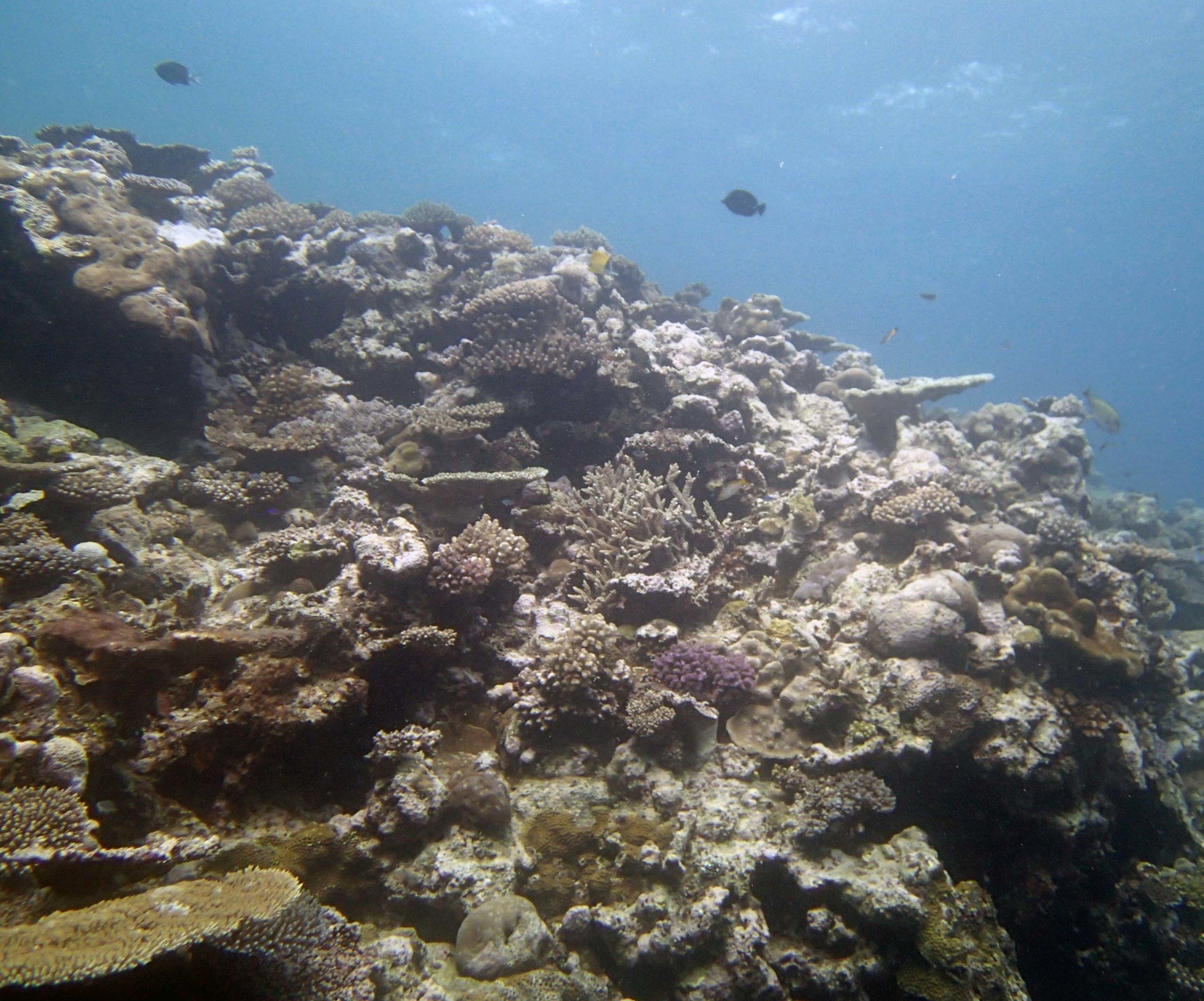 1st dive in Tonga.JPG