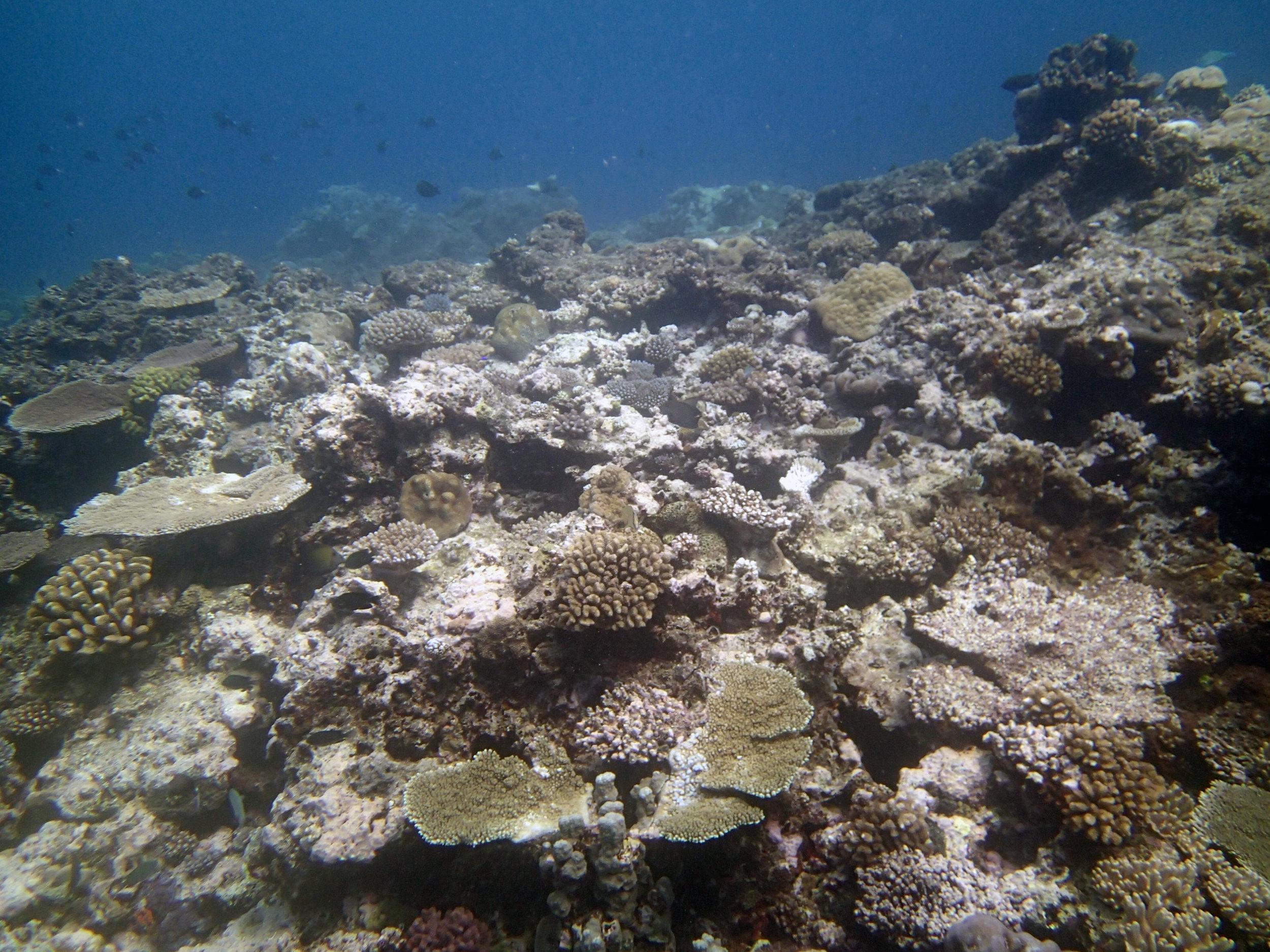 first dive in Tonga.jpg