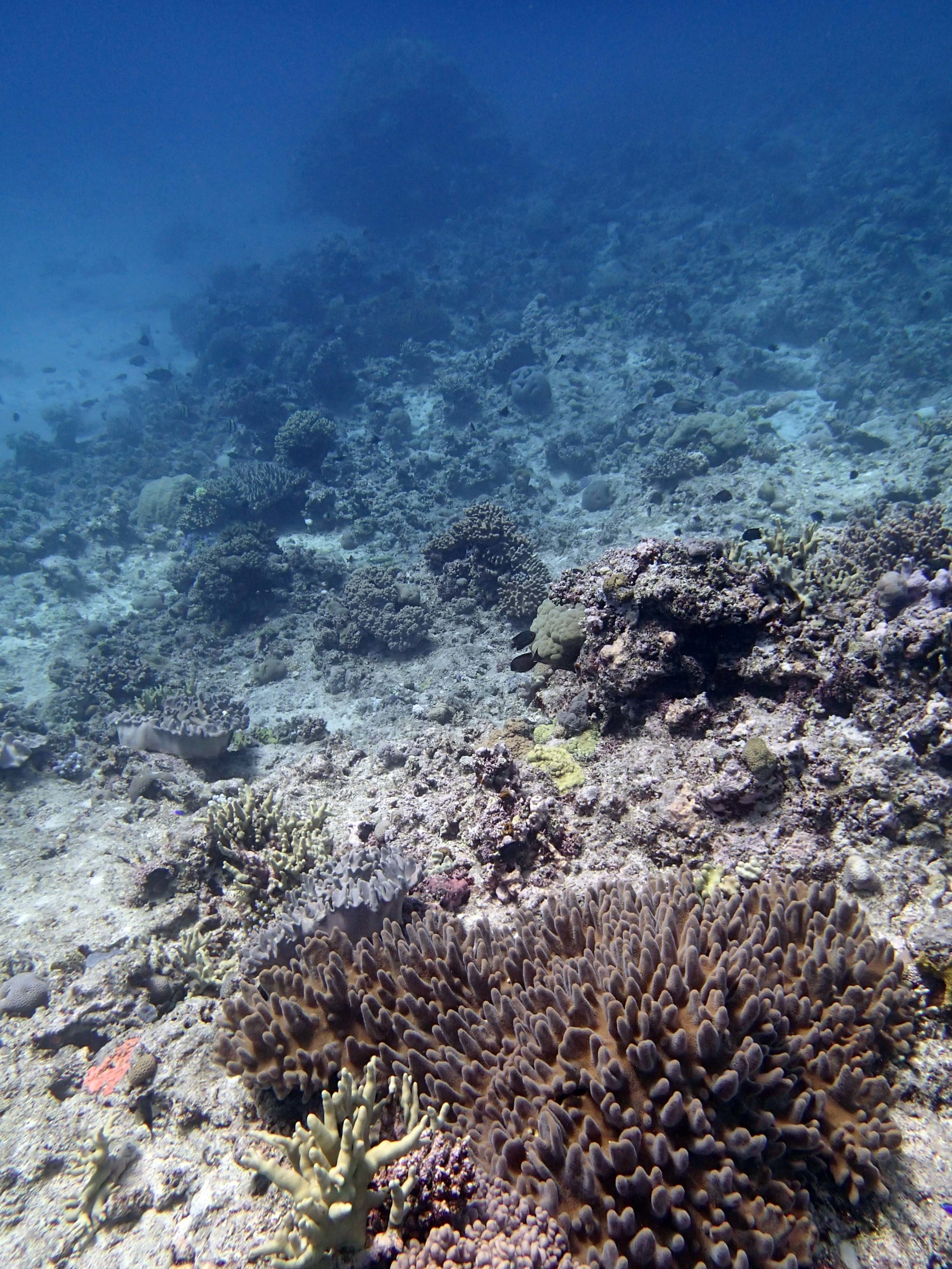 soft and hard corals.JPG