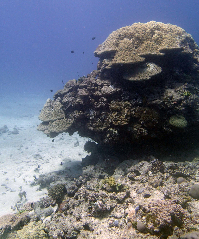 Tongan reefs.JPG