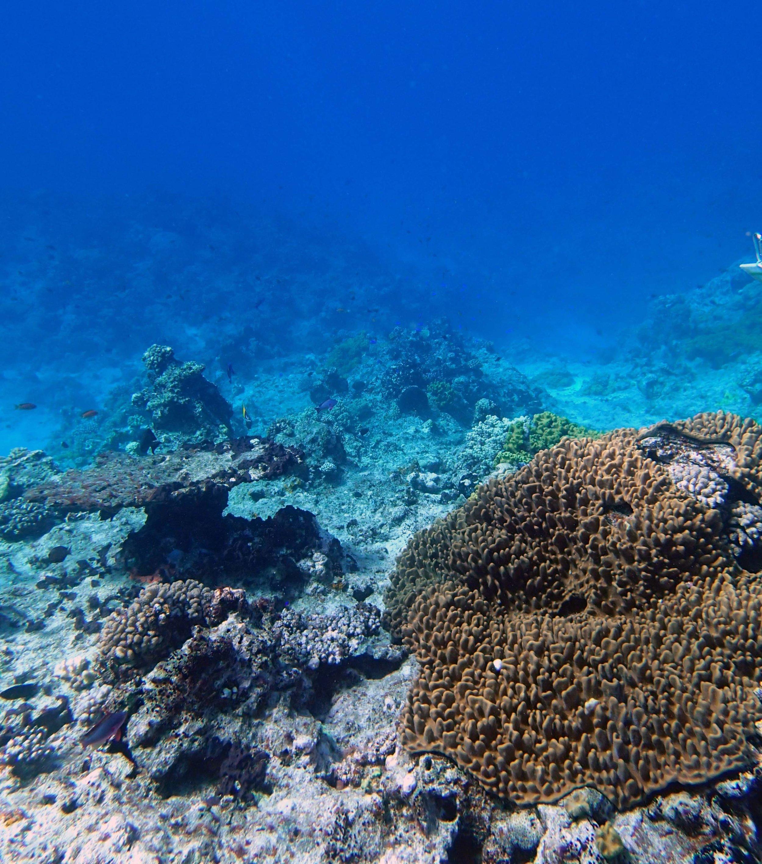 soft coral carpet.JPG