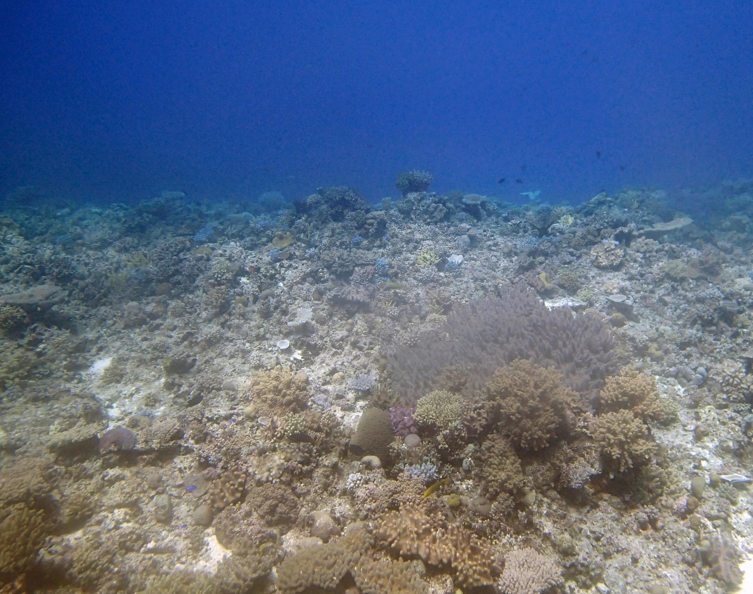 best dive of trip (so far).JPG