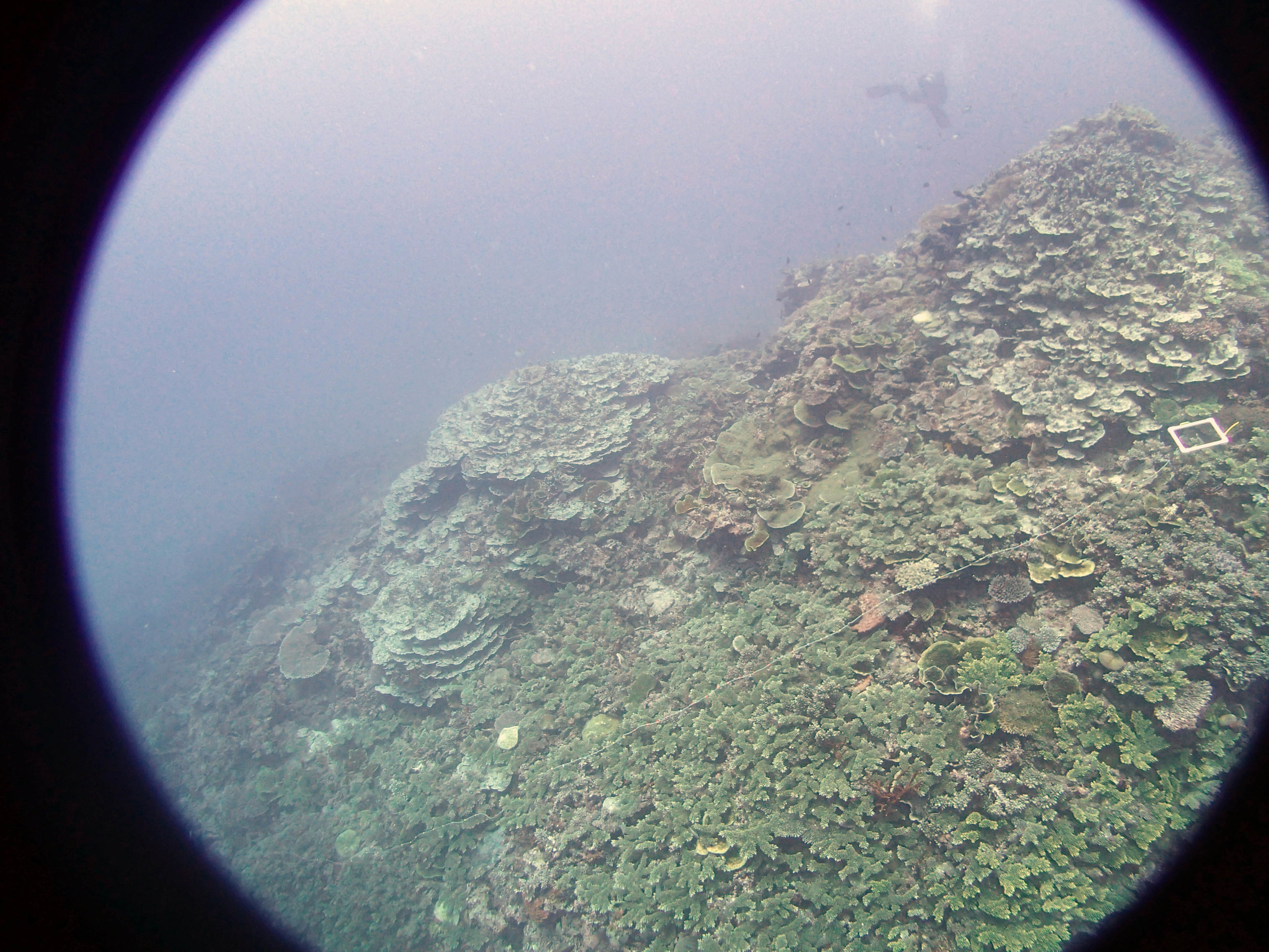 the murky depths.JPG
