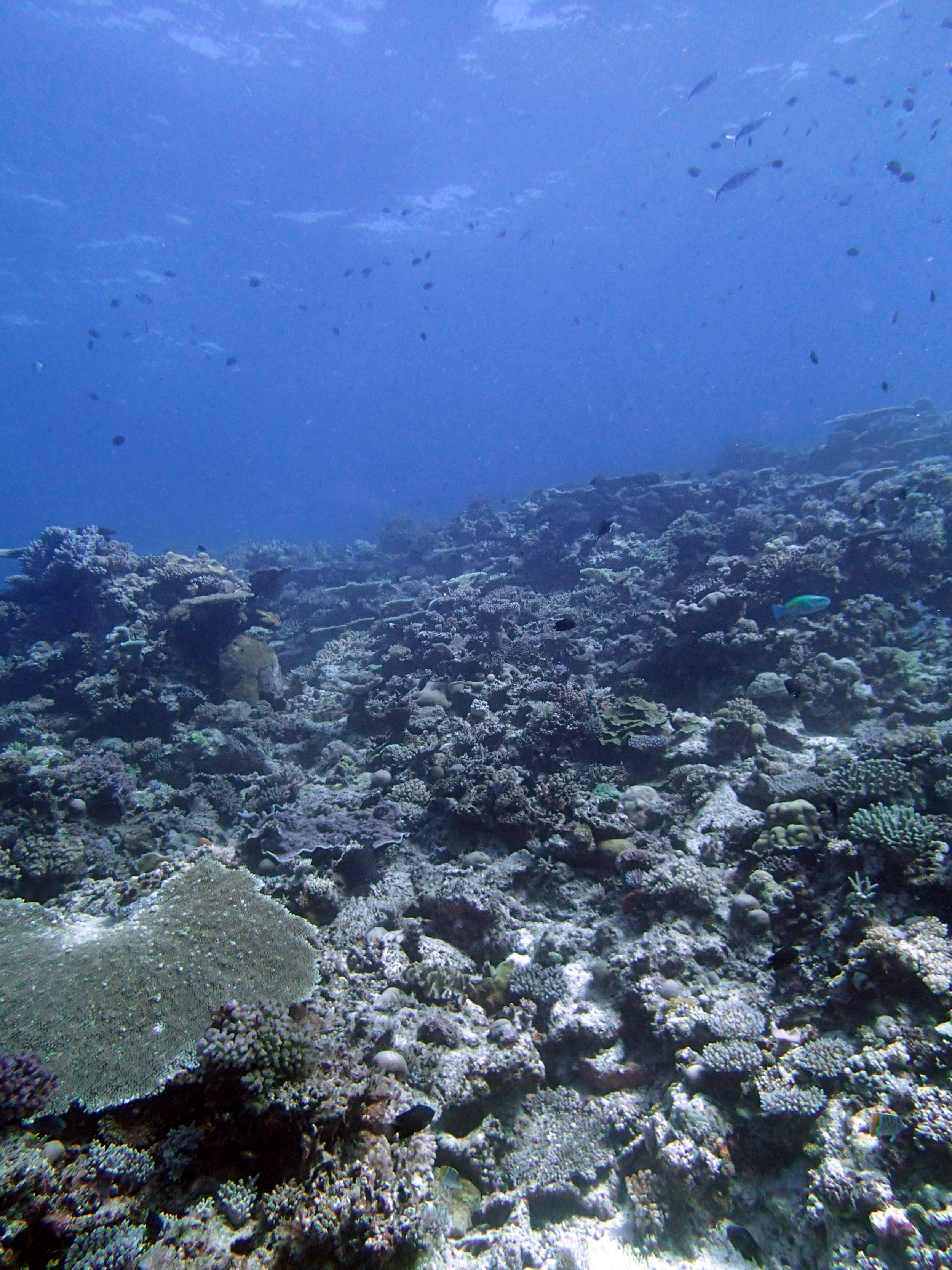 amazing dive.JPG