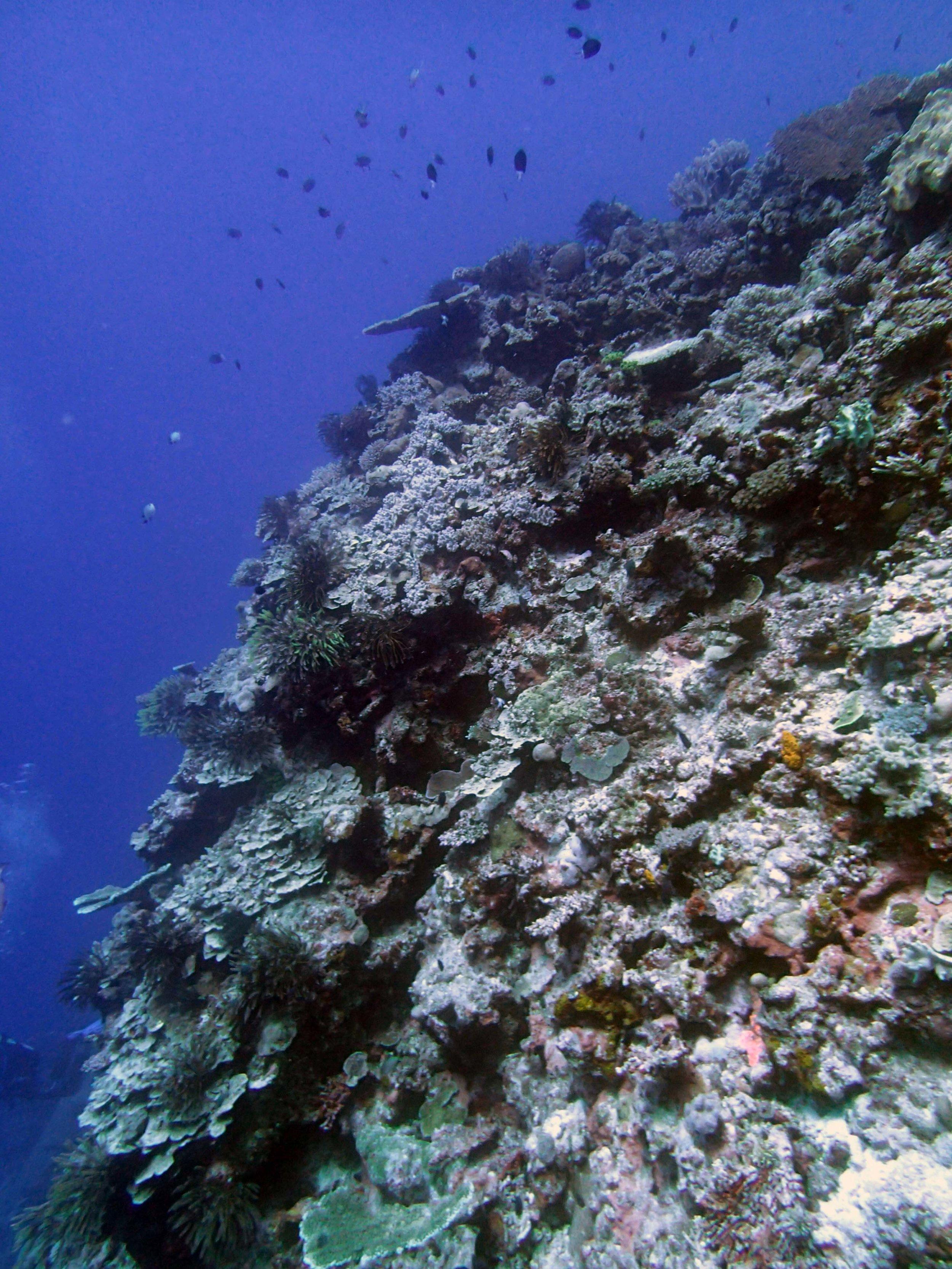 nice coral platform.JPG