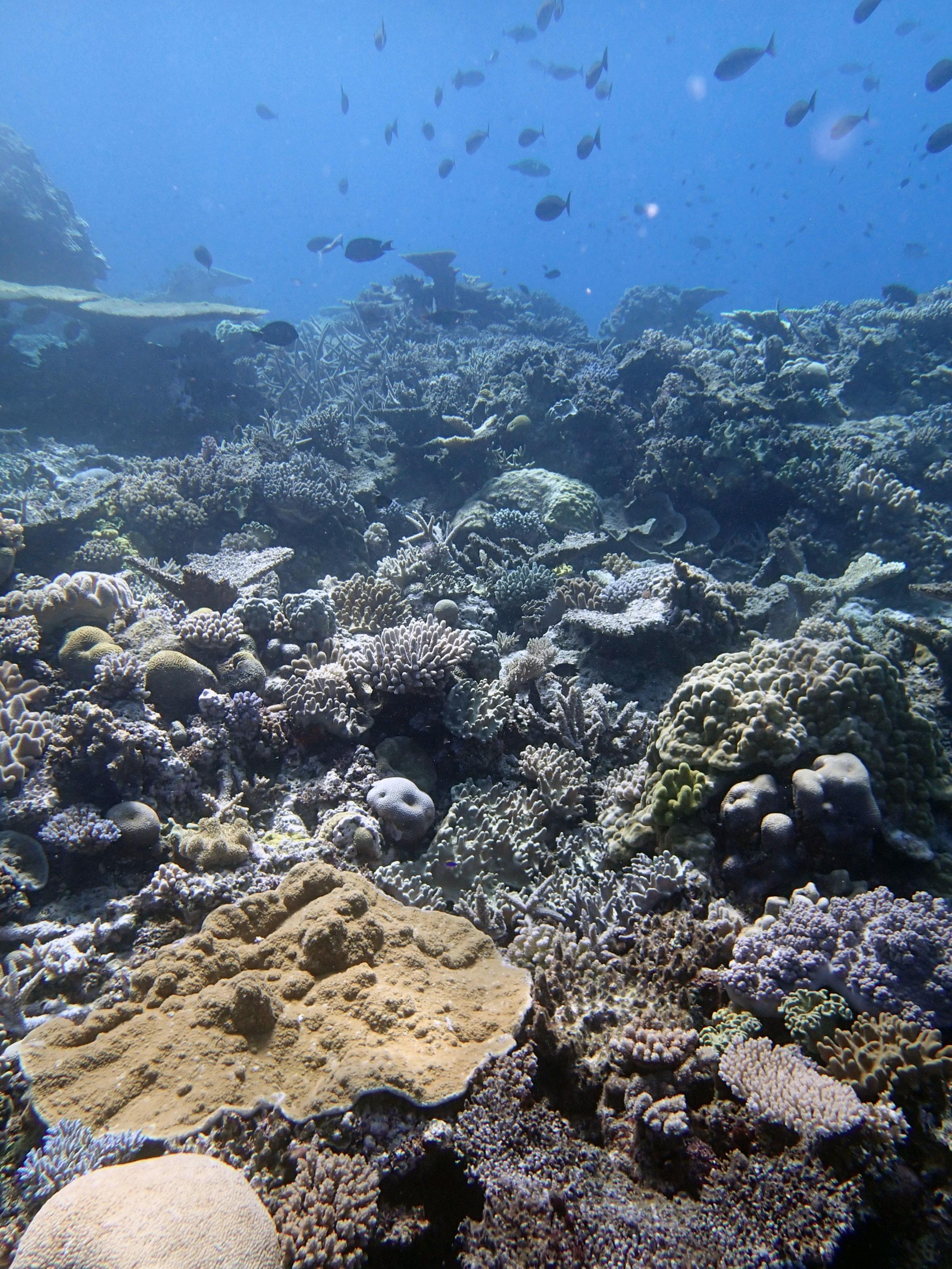 spectacular coral garden.JPG