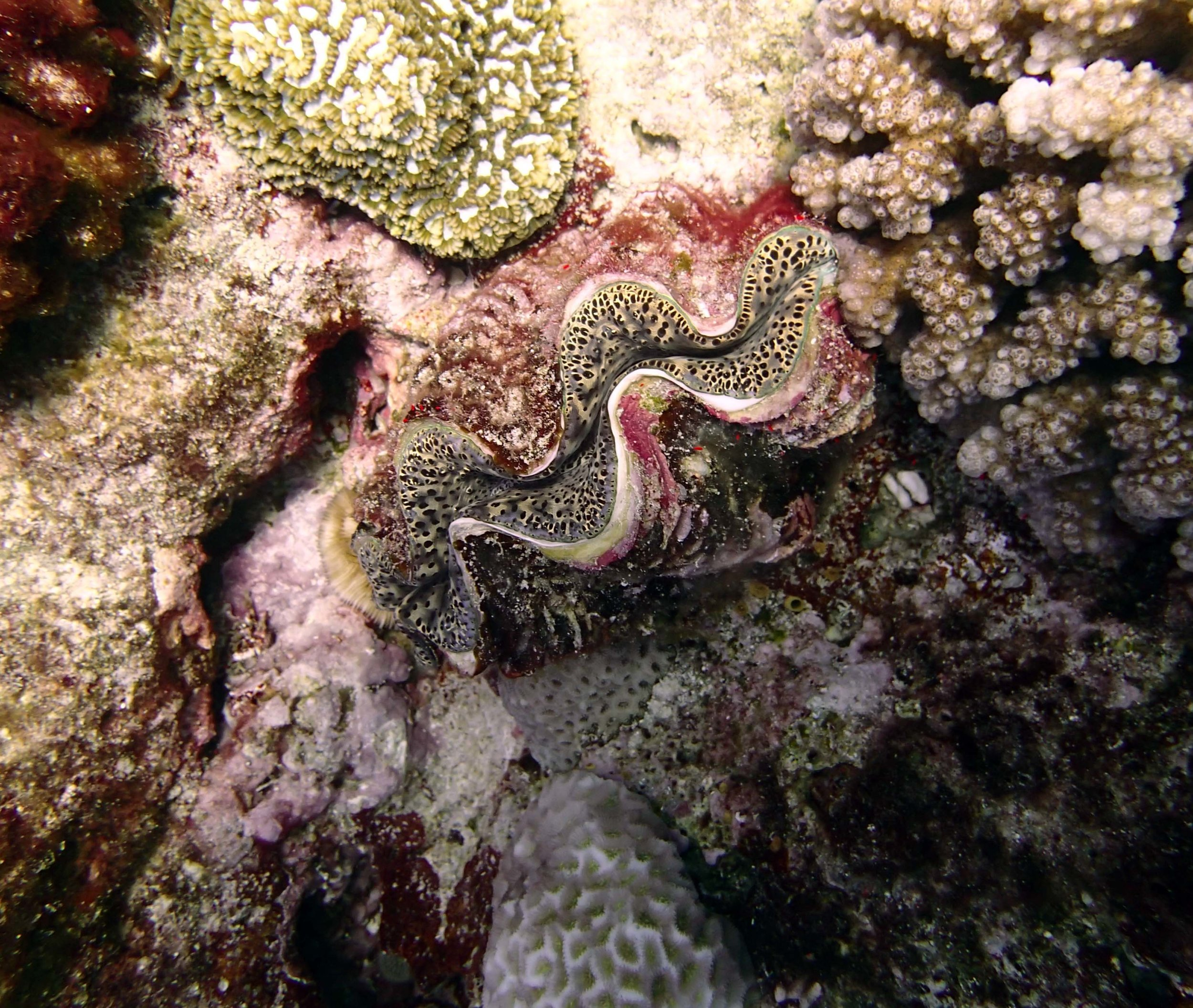 giant clam at TOHA21.jpg