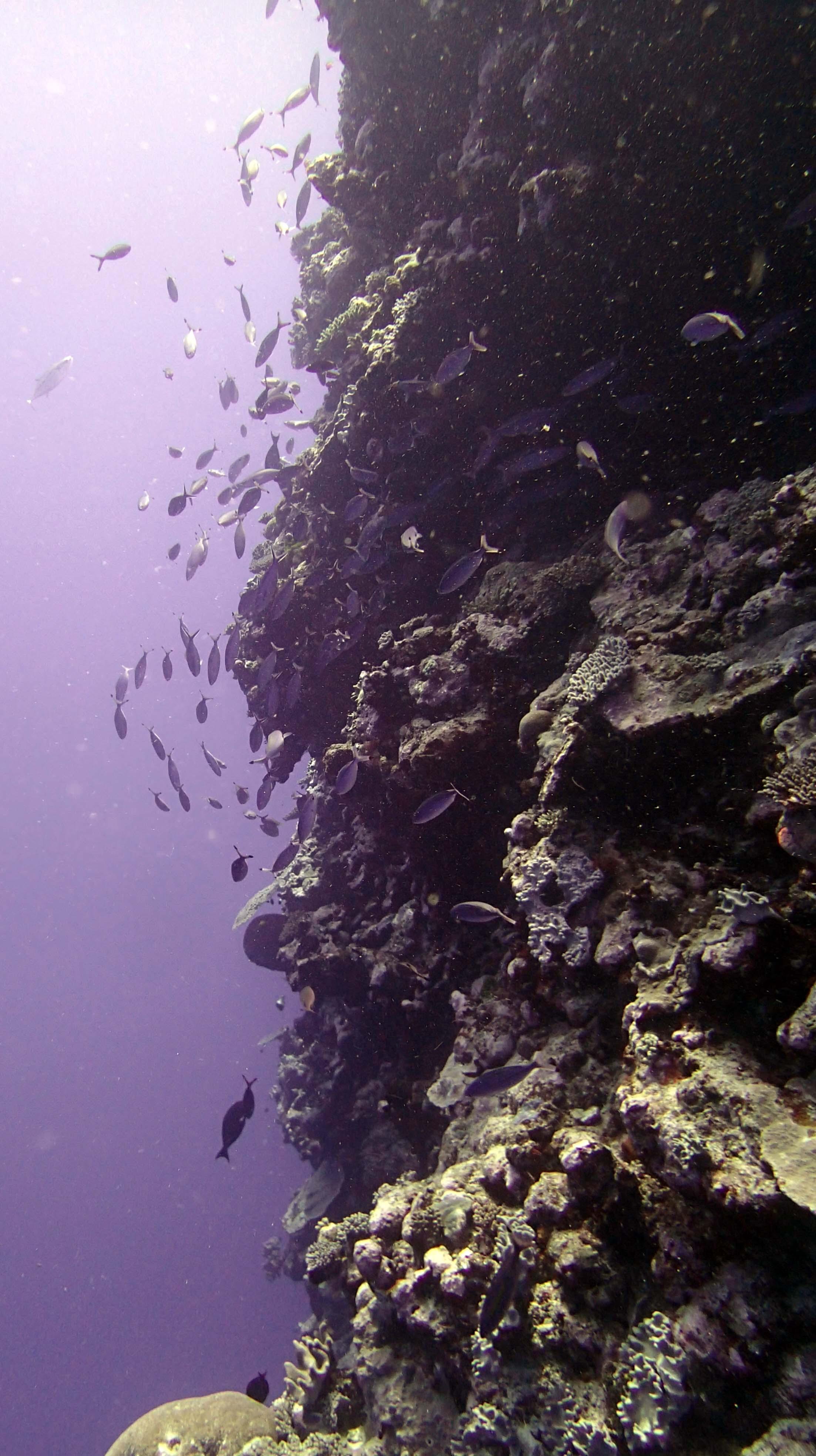 fish covered wall.jpg