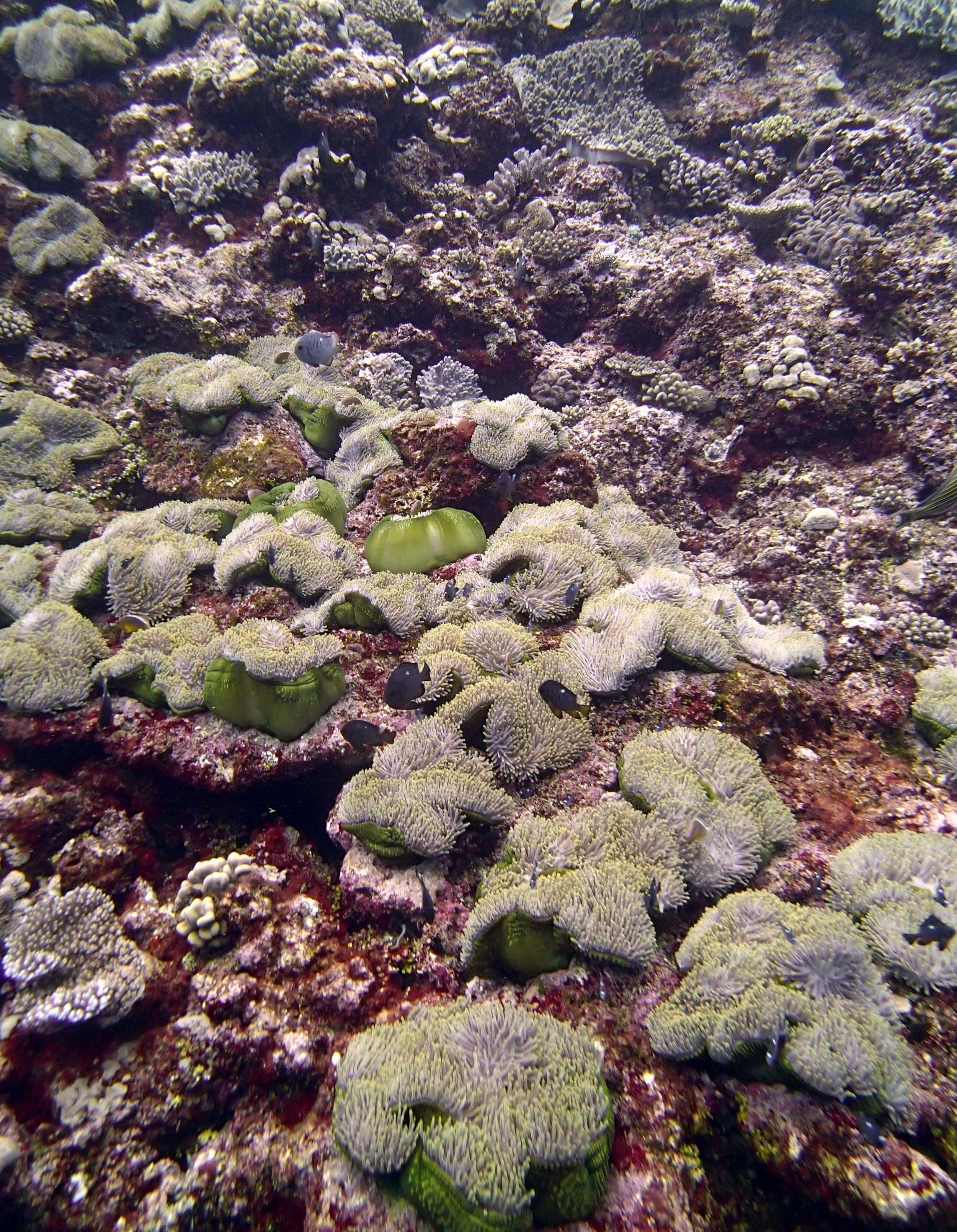 tons of anemones.jpg