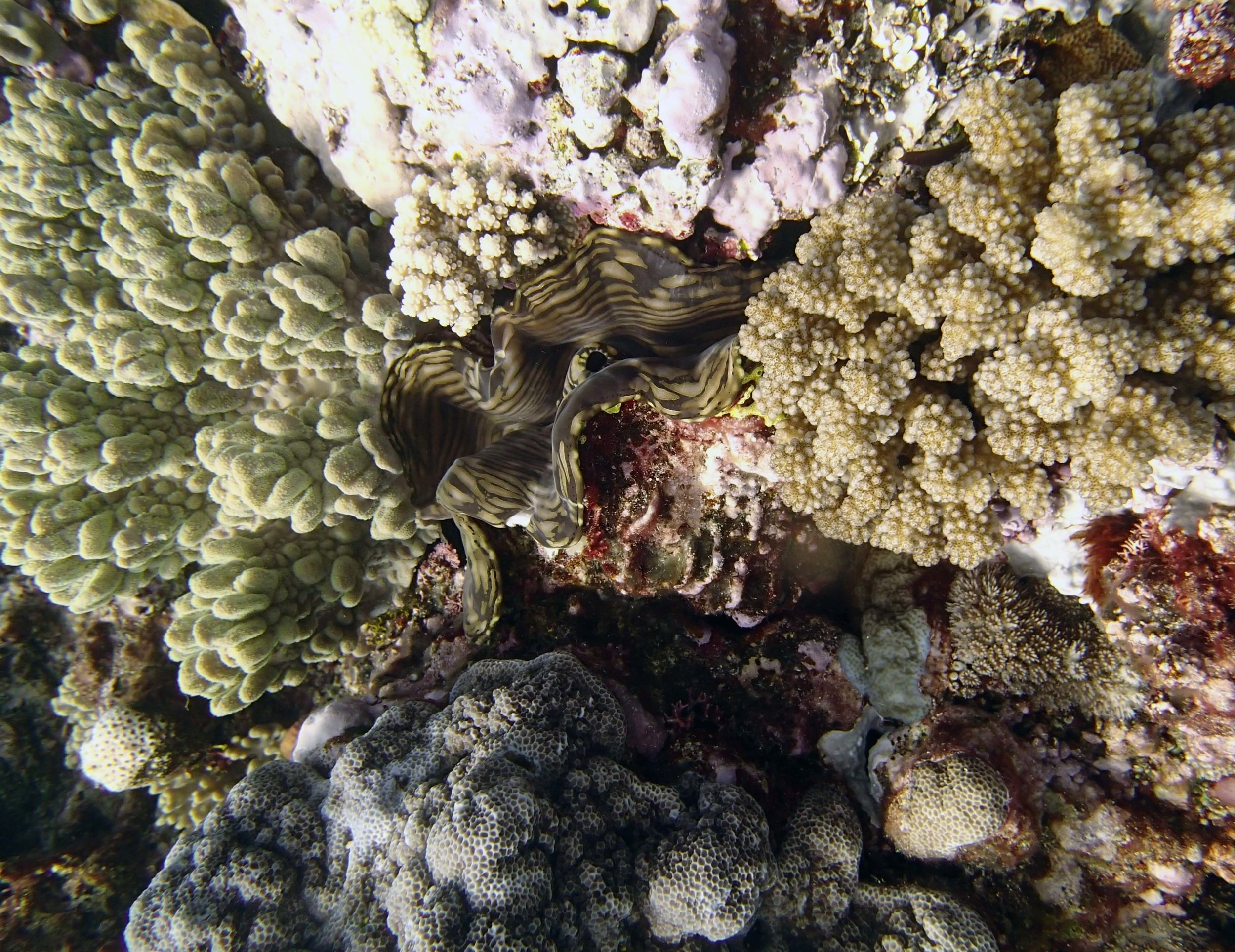 giant clam at TOHA29.jpg