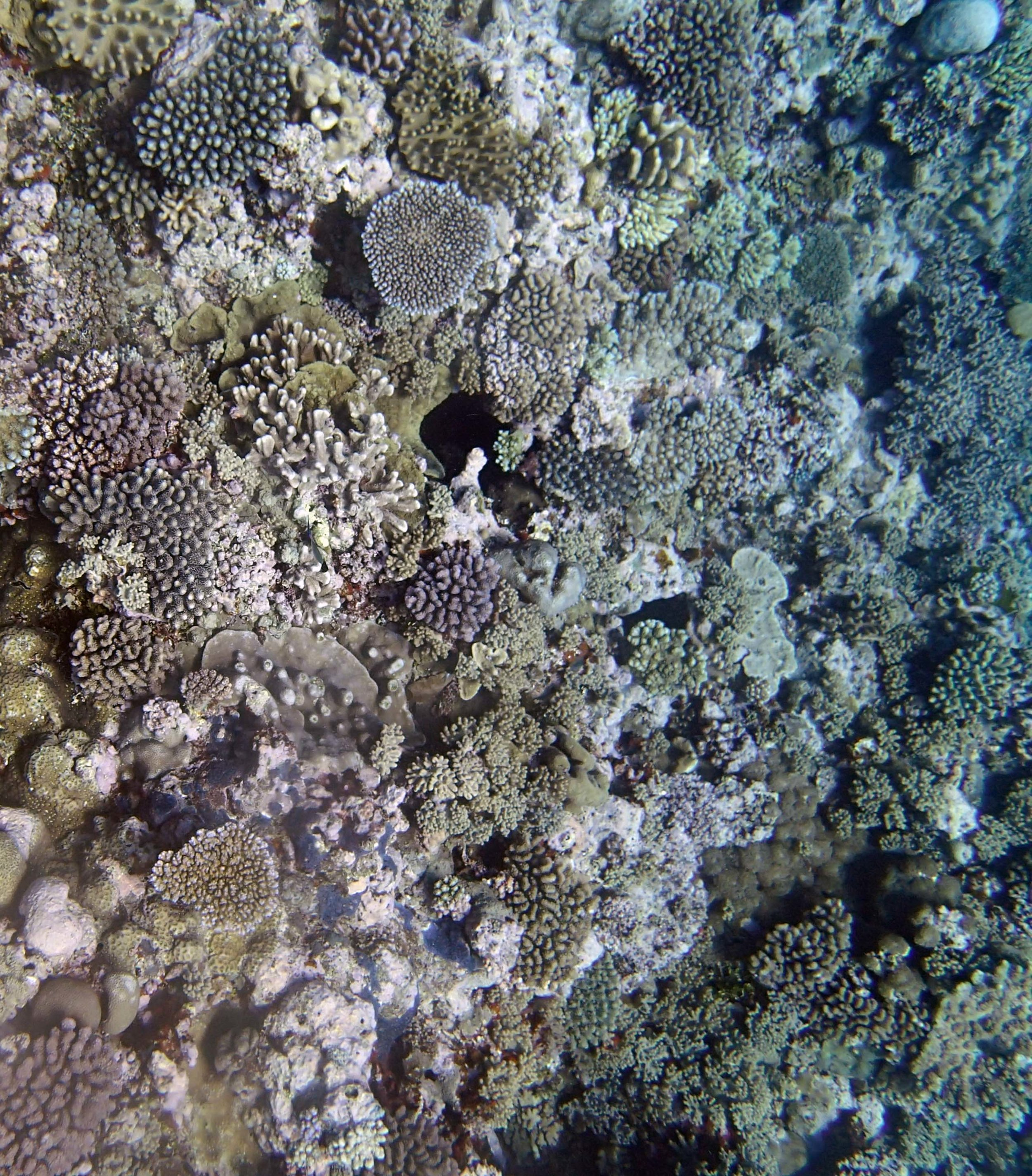 high coral cover.JPG