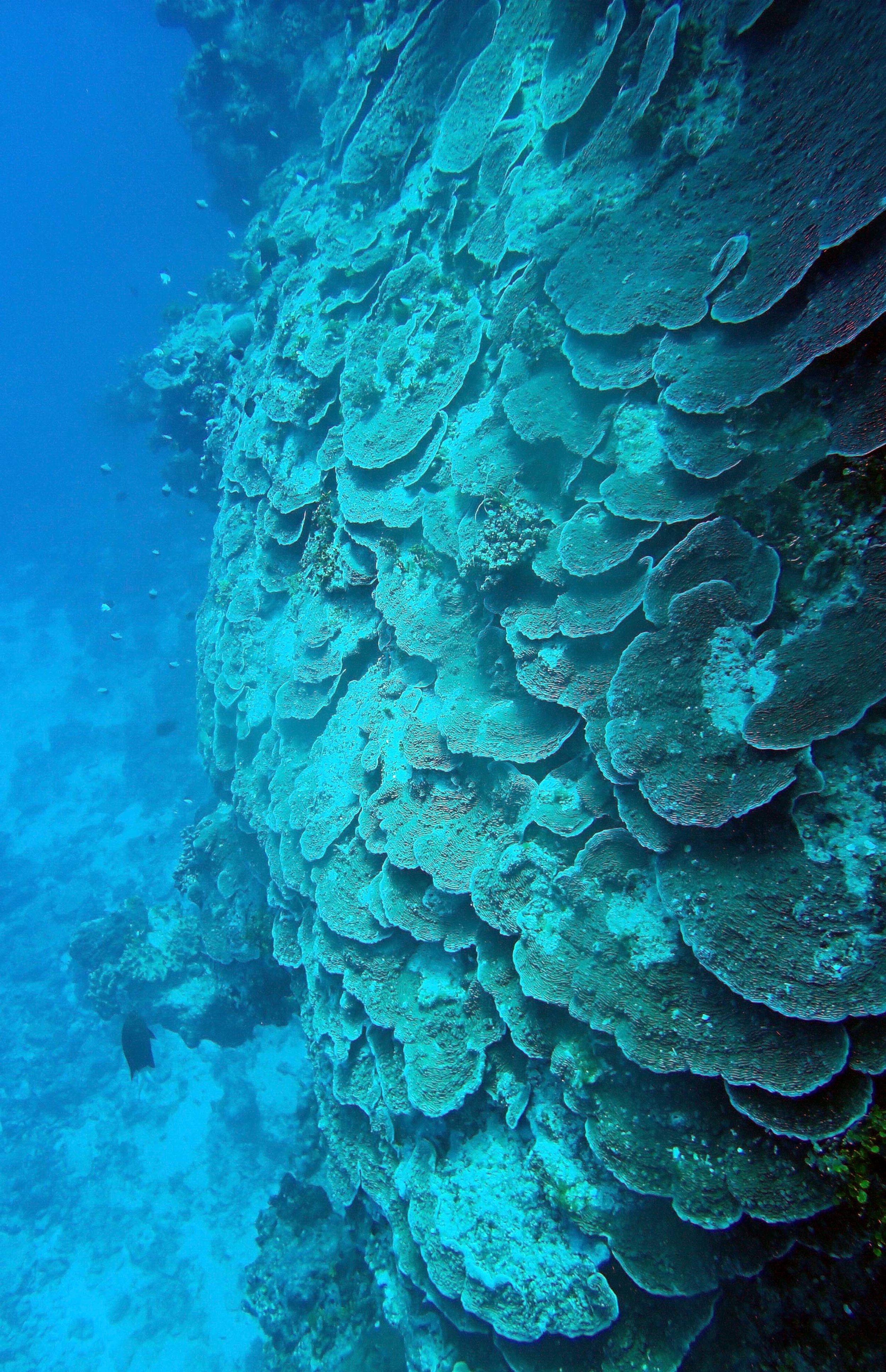 plating coral.JPG