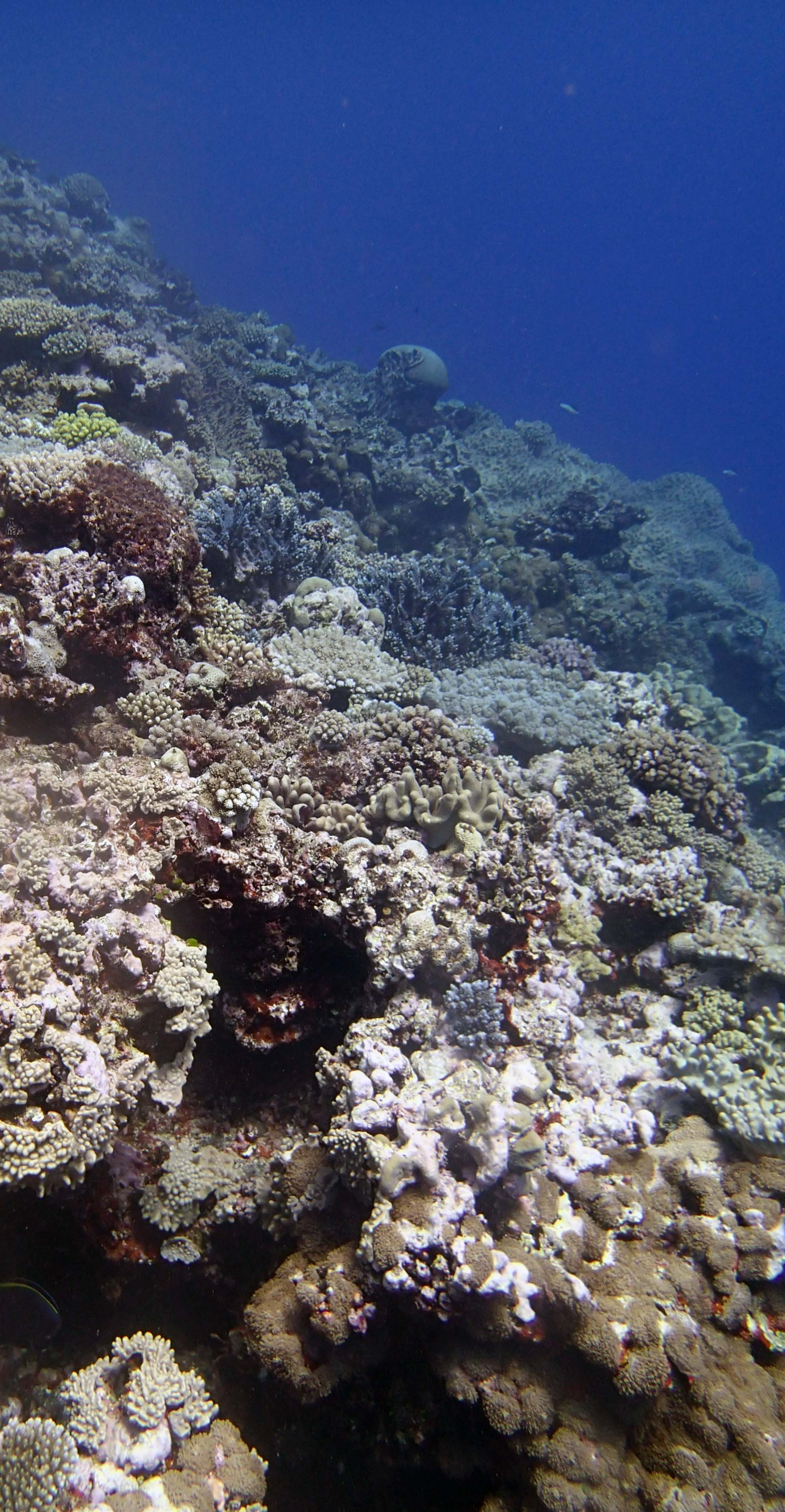 shallow reef.JPG