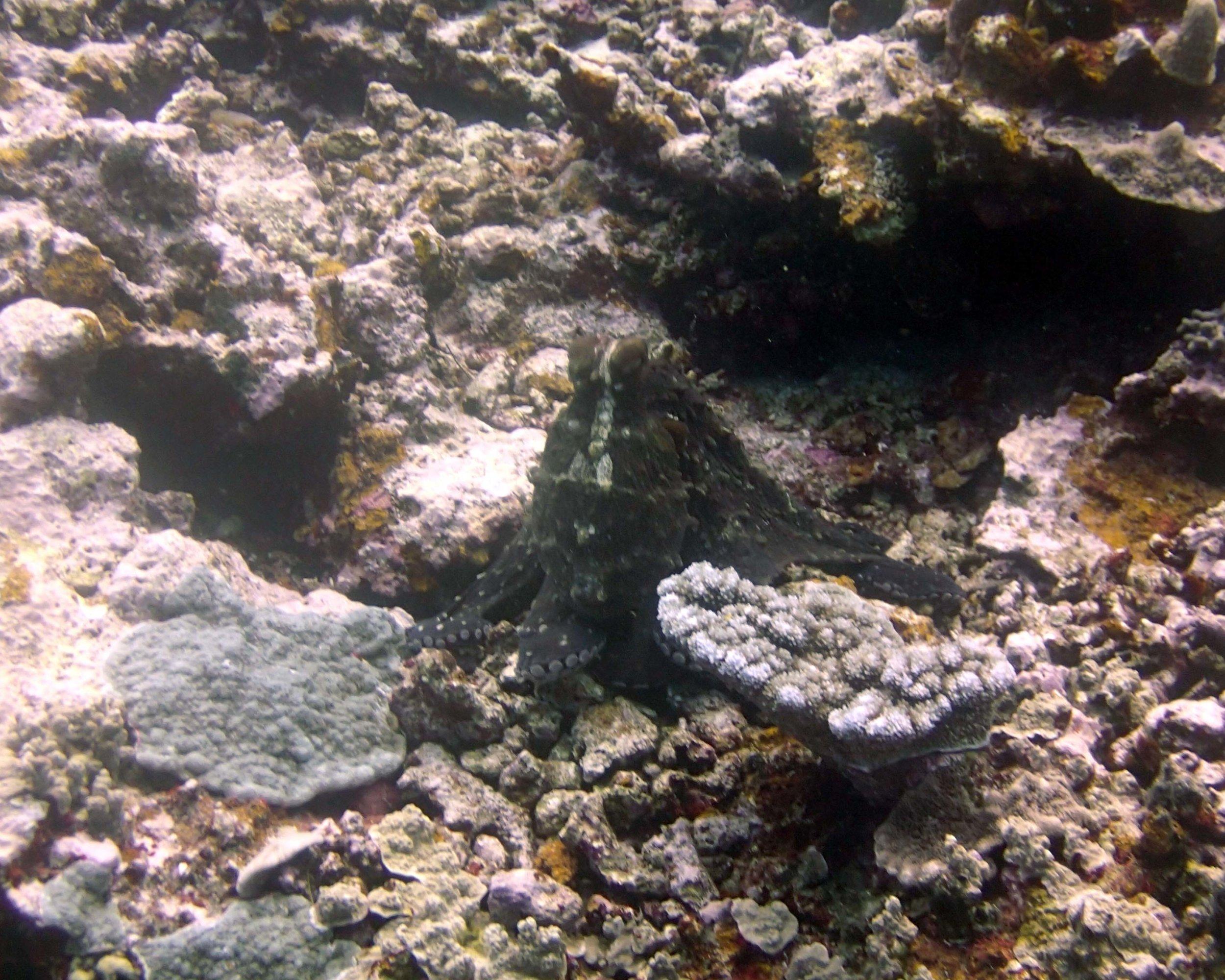 octopus 5.jpg