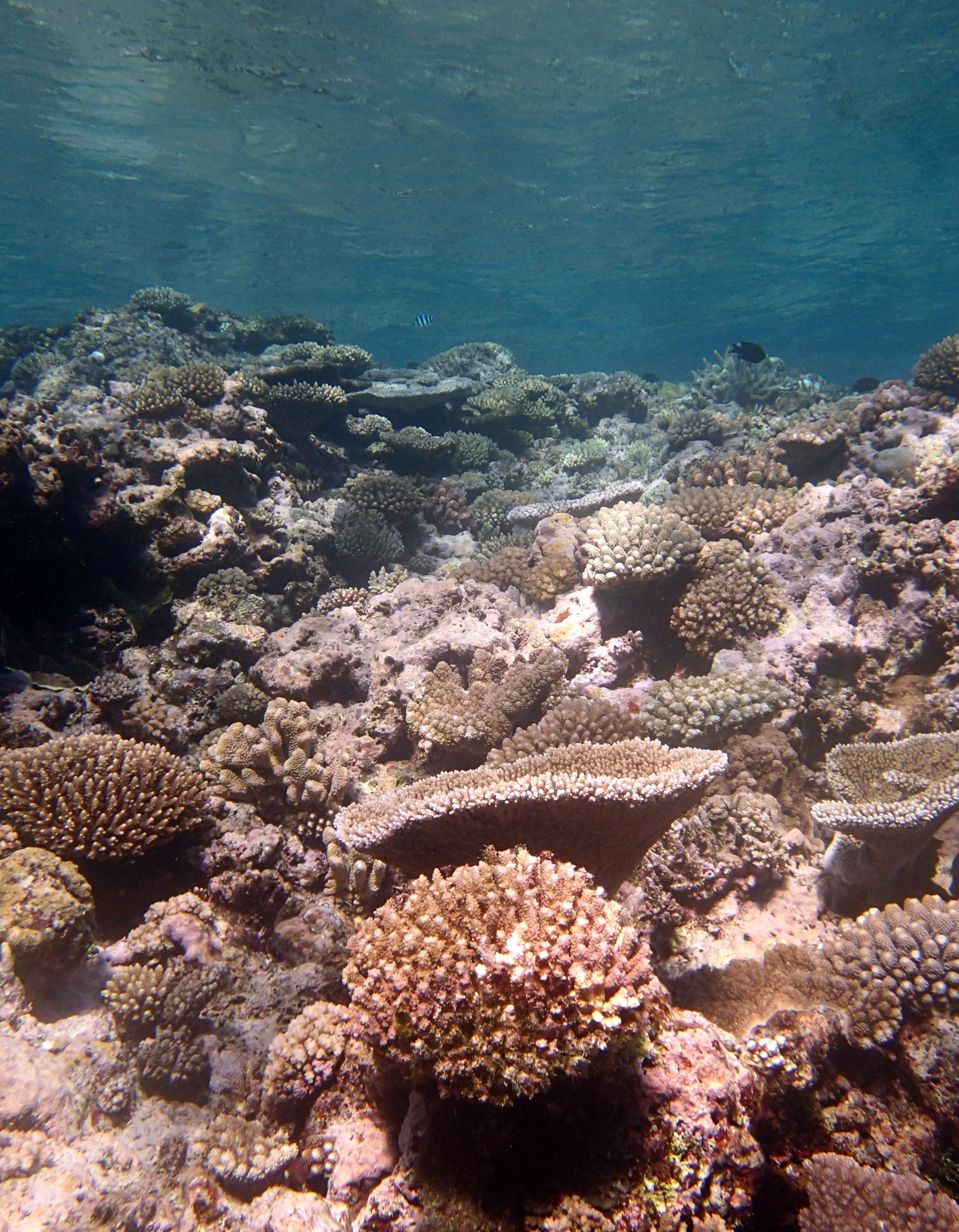 Vavau reefs.JPG