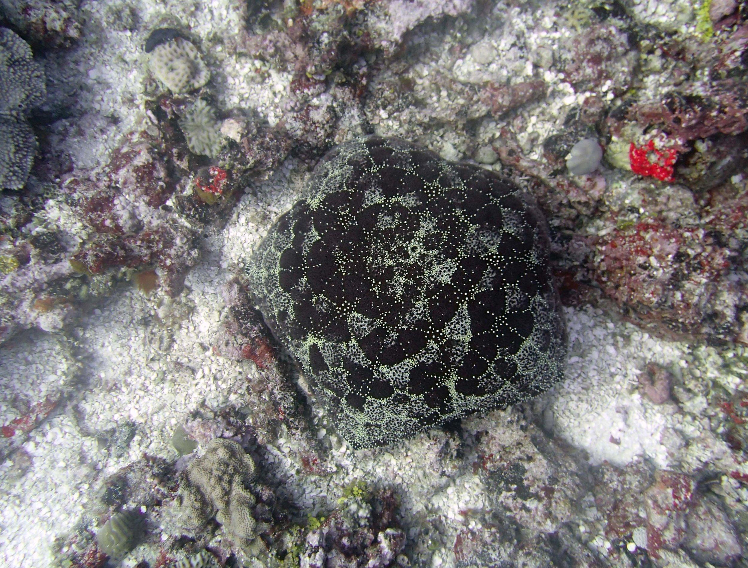 pincushion star at TOVA45.jpg