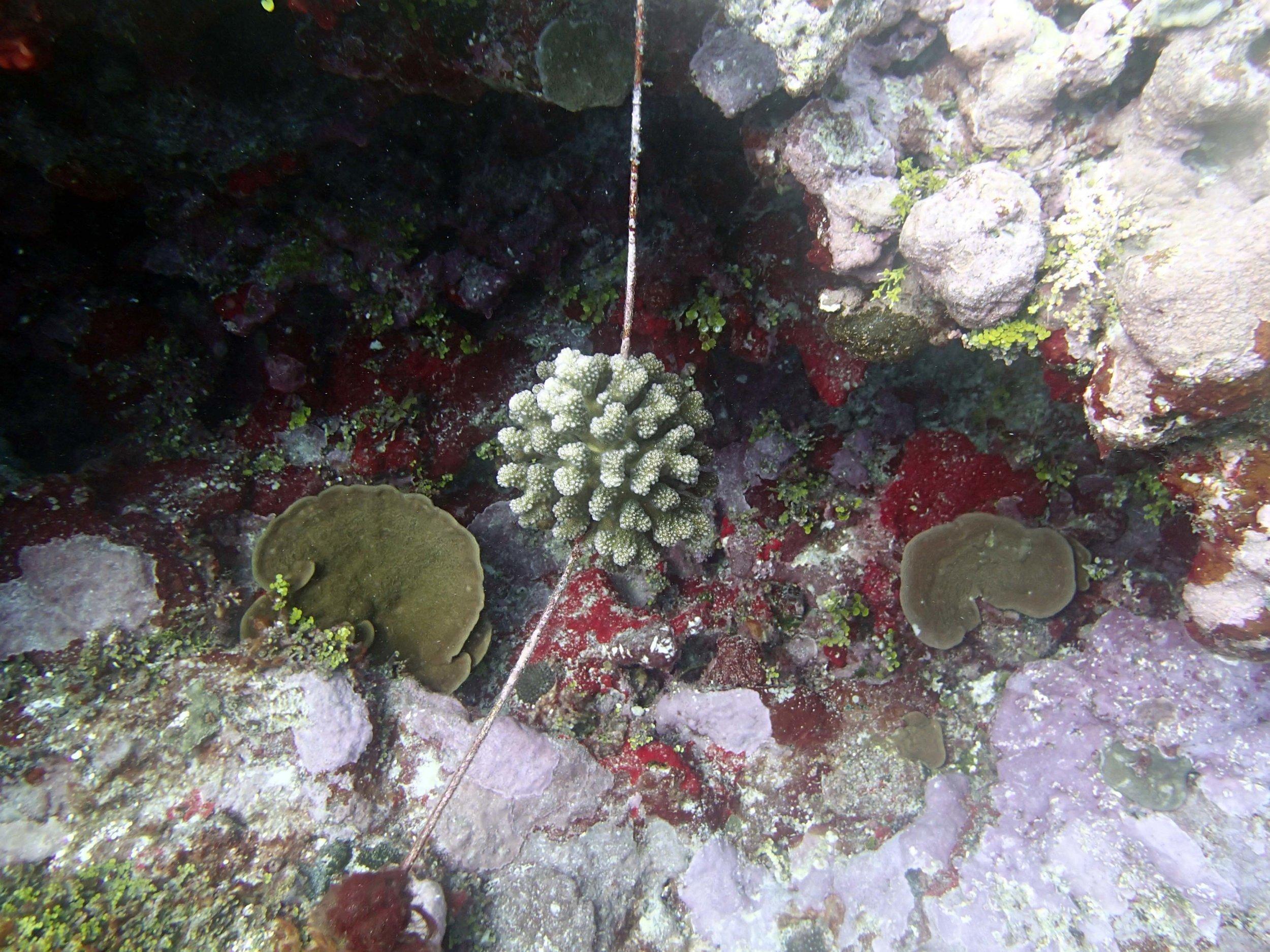 coral on rope.jpg