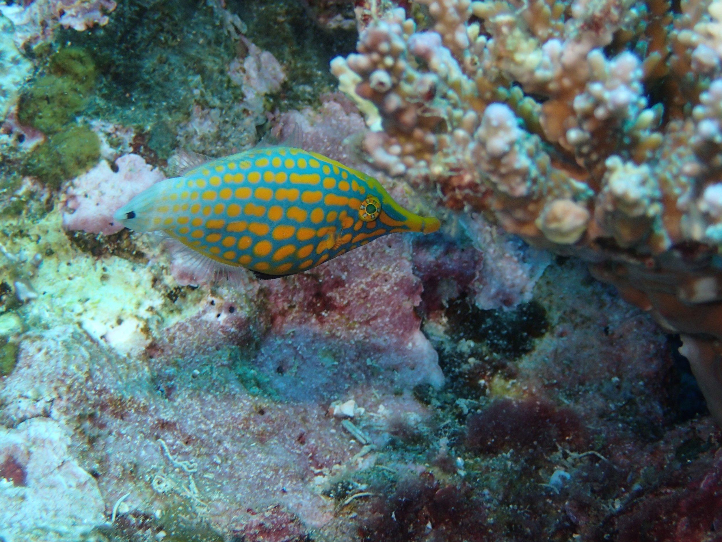 mystery fish.jpg