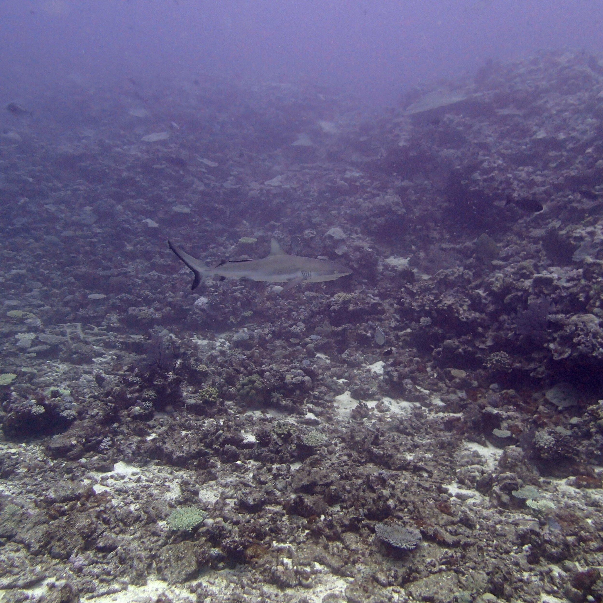 shark at NCCR28.jpg