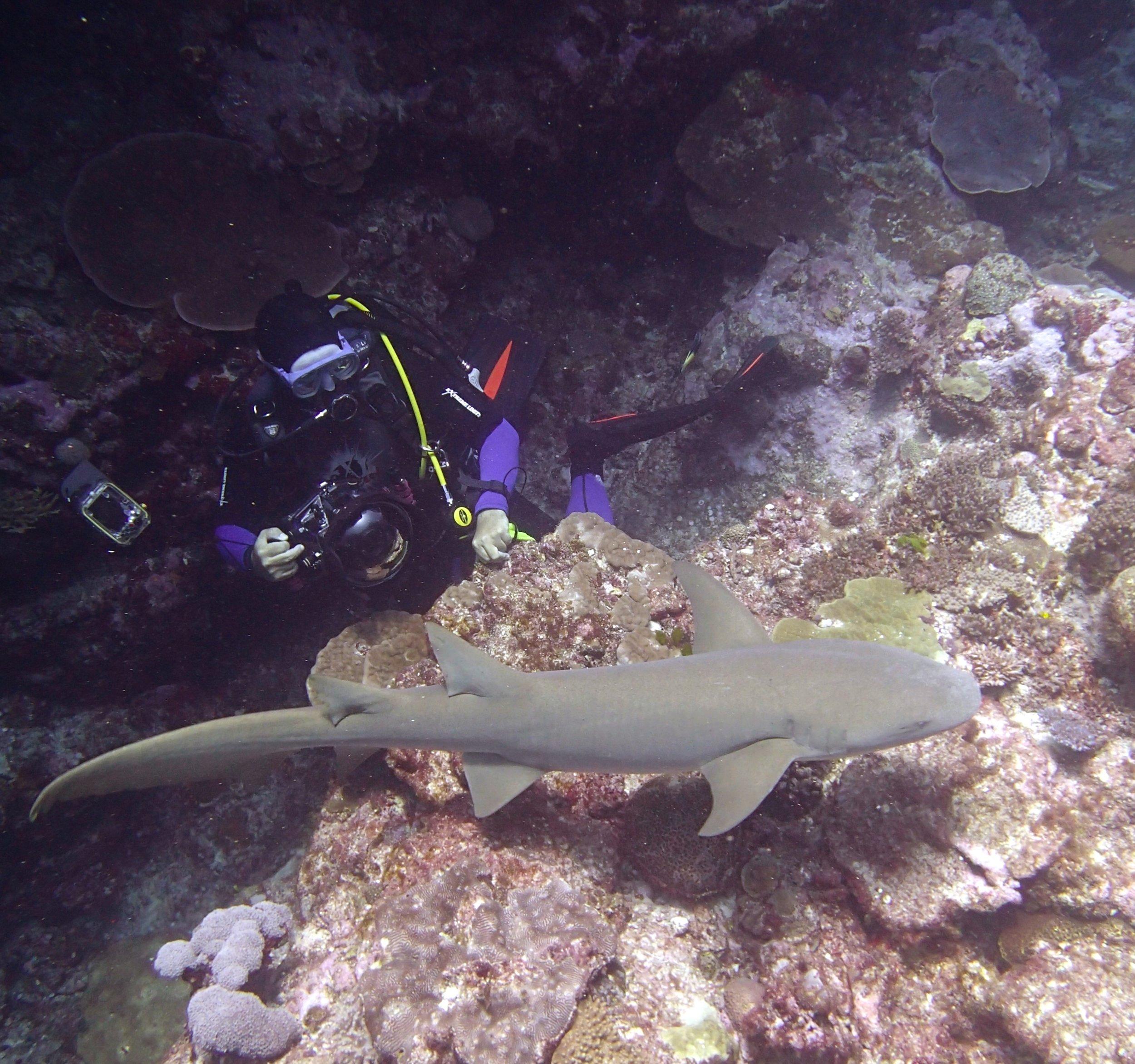 Serge and nurse shark.jpg