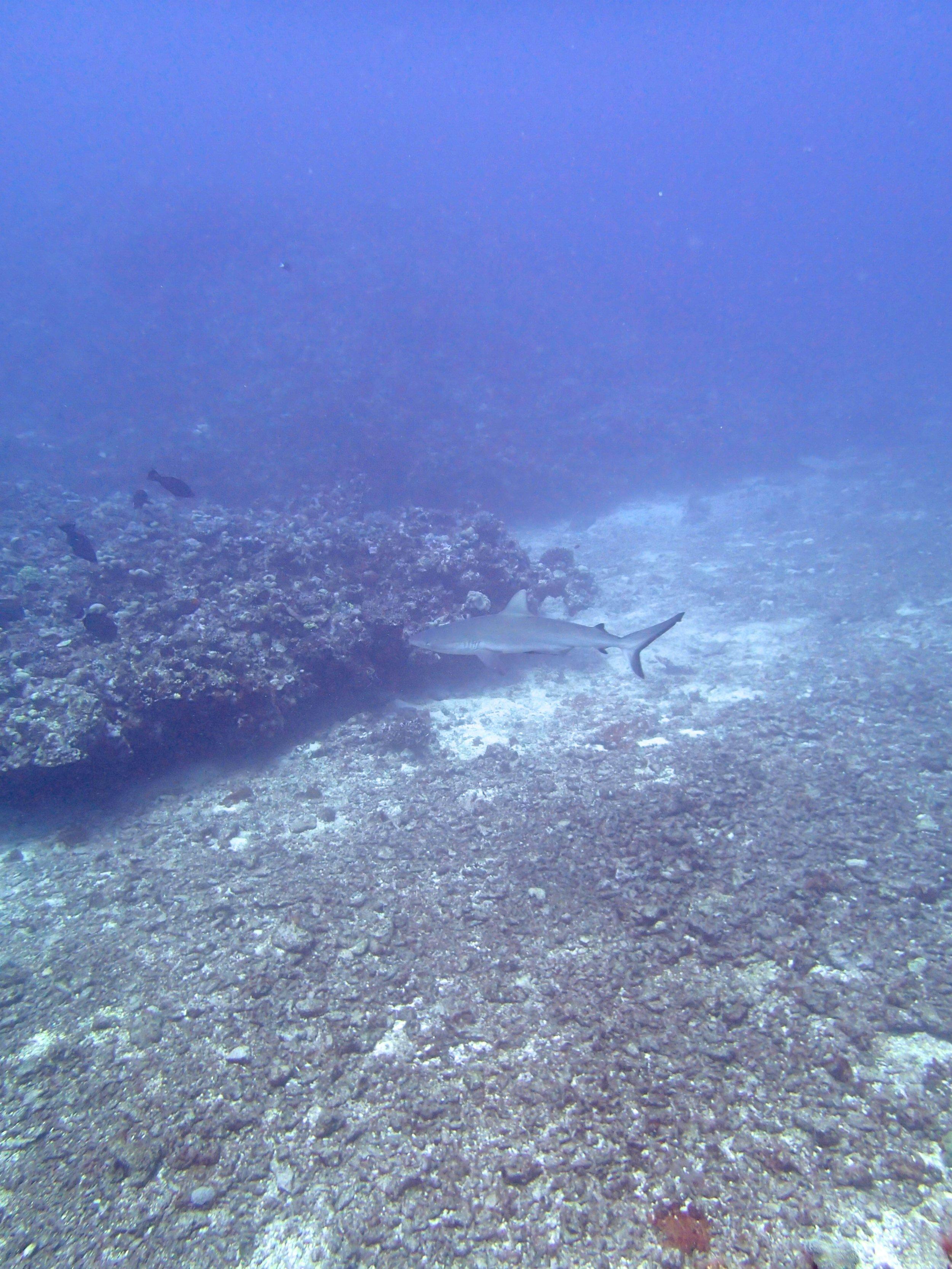 shark at NCCR33.jpg