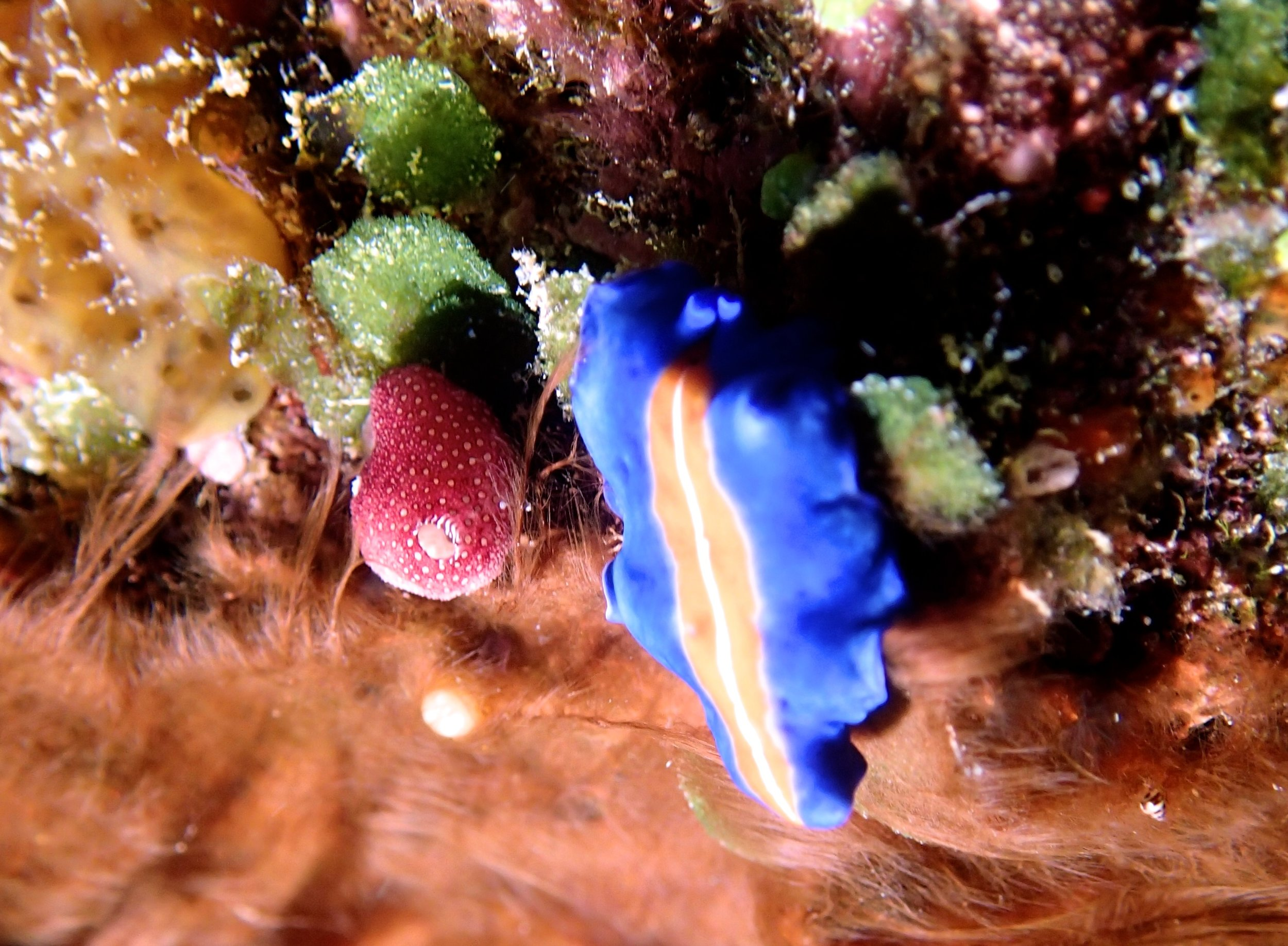 awesome nudibranc.jpg