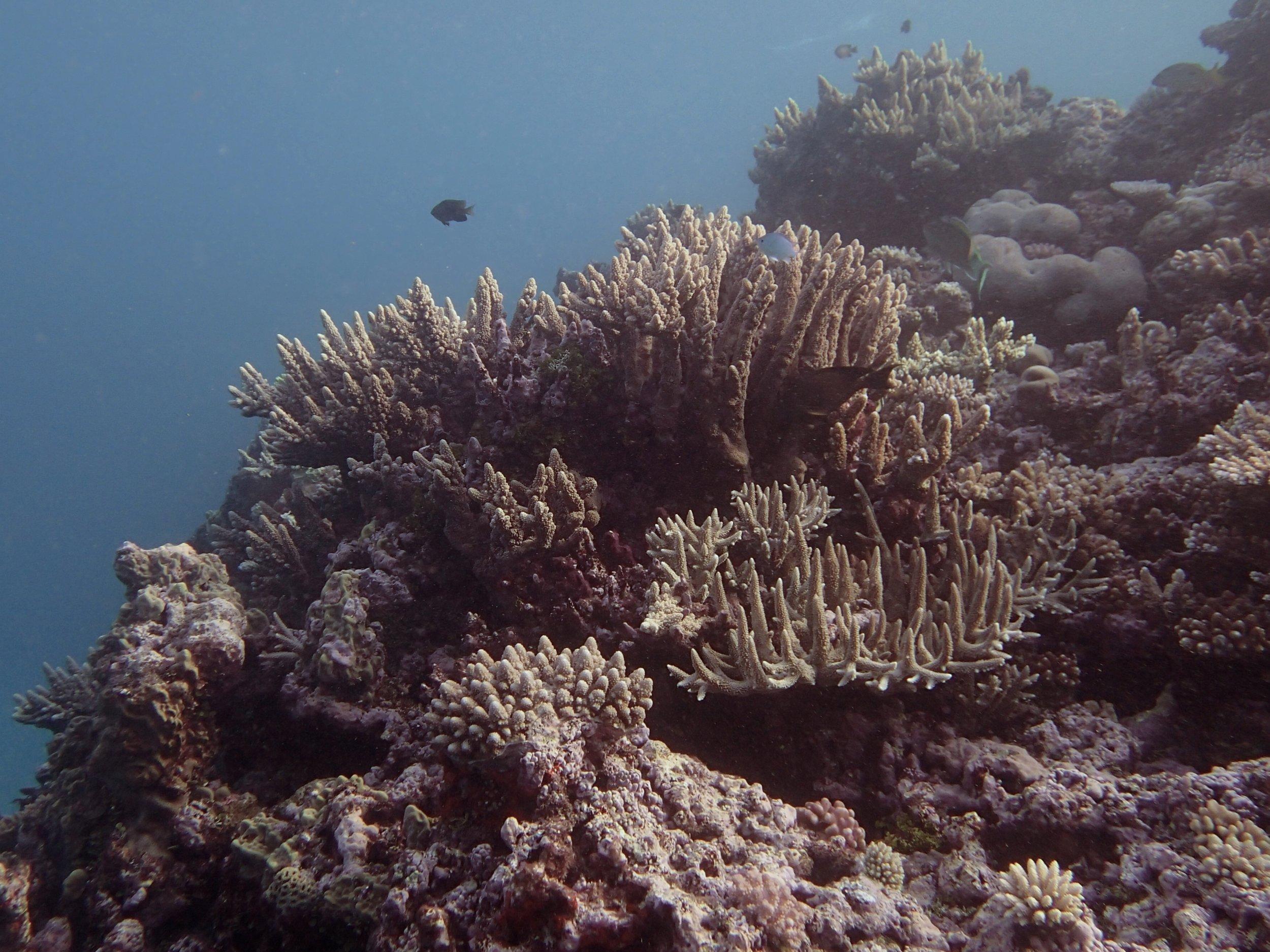 NCCR35 shallows.jpg
