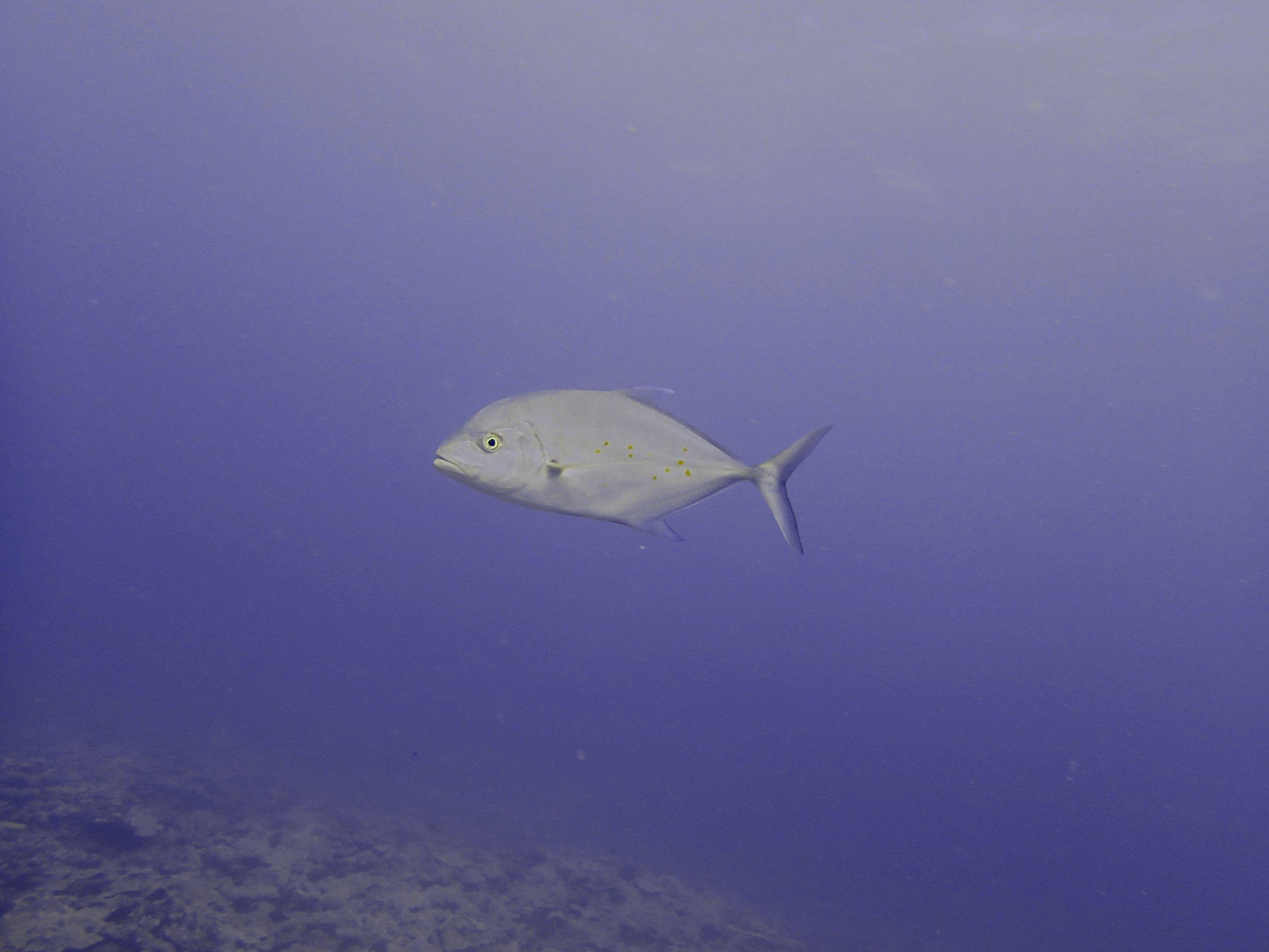 aggressive fish.jpg