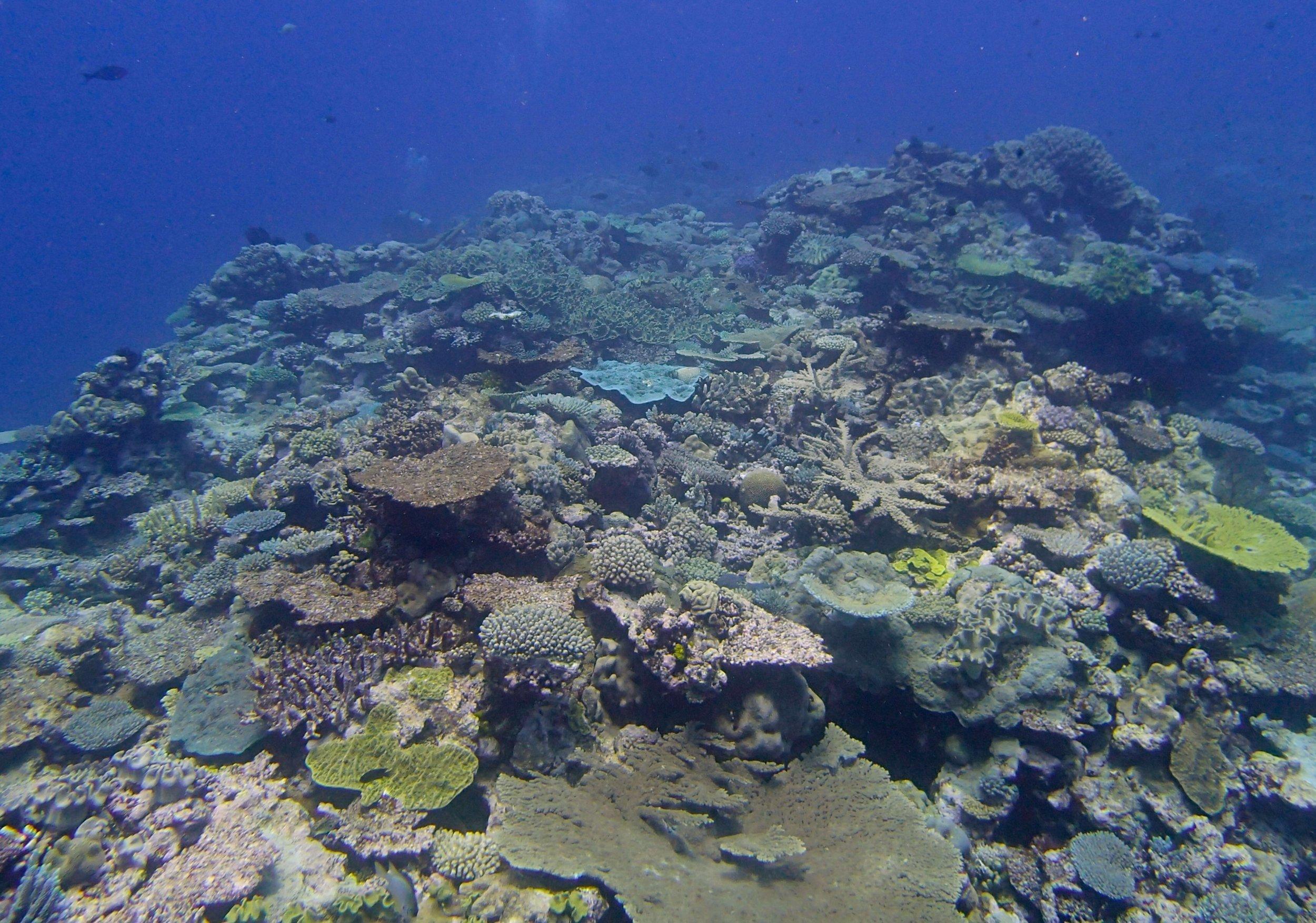 11-11-2013 Portail Atoll.jpg